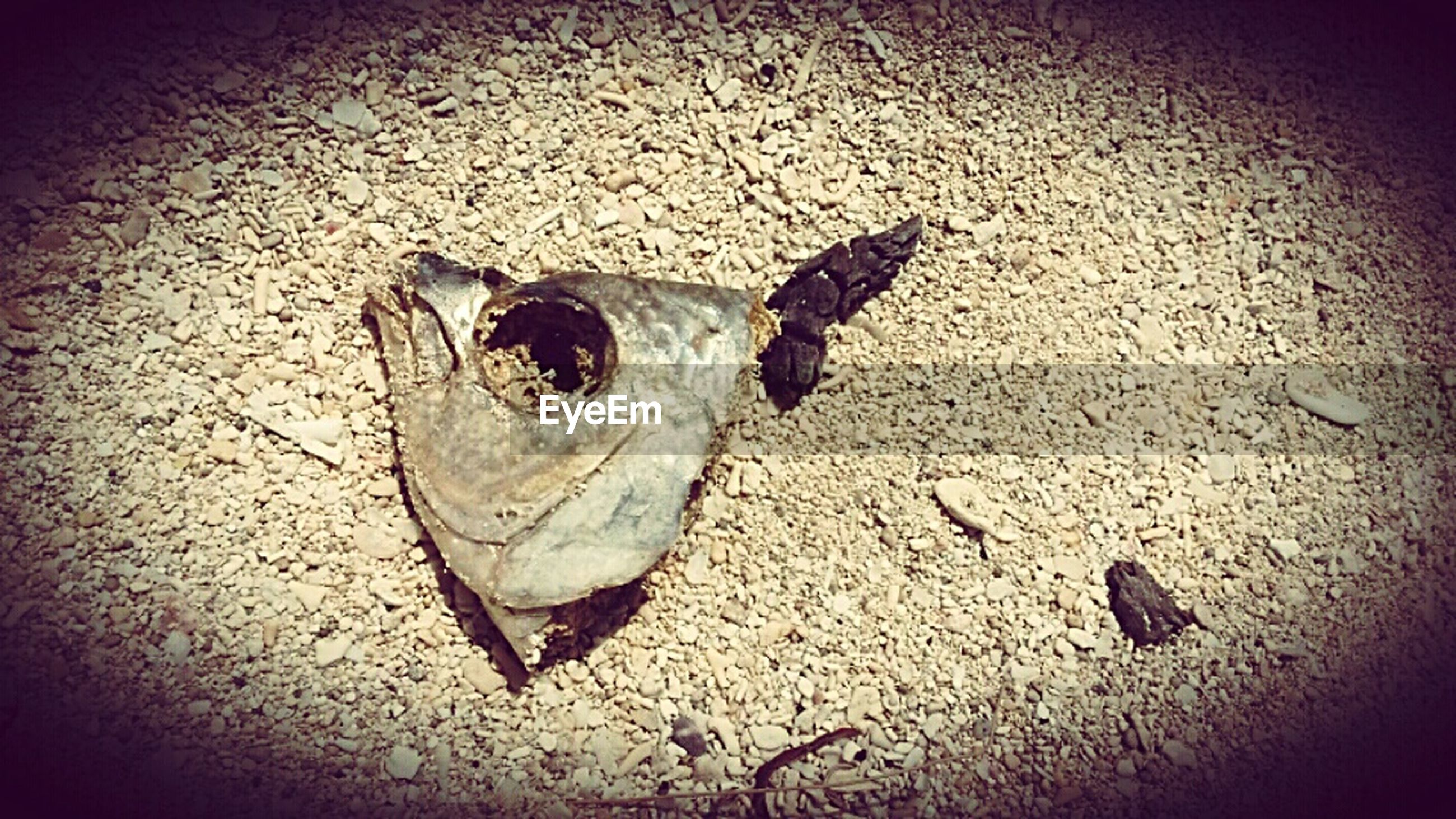animal themes, one animal, high angle view, wildlife, animals in the wild, insect, shadow, sand, close-up, vignette, ground, street, outdoors, auto post production filter, sunlight, day, nature, no people, textured, dead animal