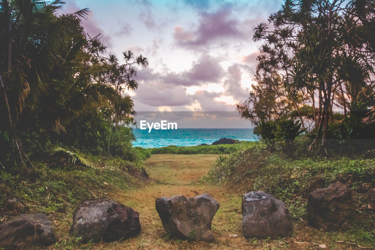 sky, sea, water, tranquility, land, cloud - sky, nature, tranquil scene, plant, beach, tree, beauty in nature, rock, scenics - nature, solid, no people, rock - object, horizon, horizon over water, outdoors