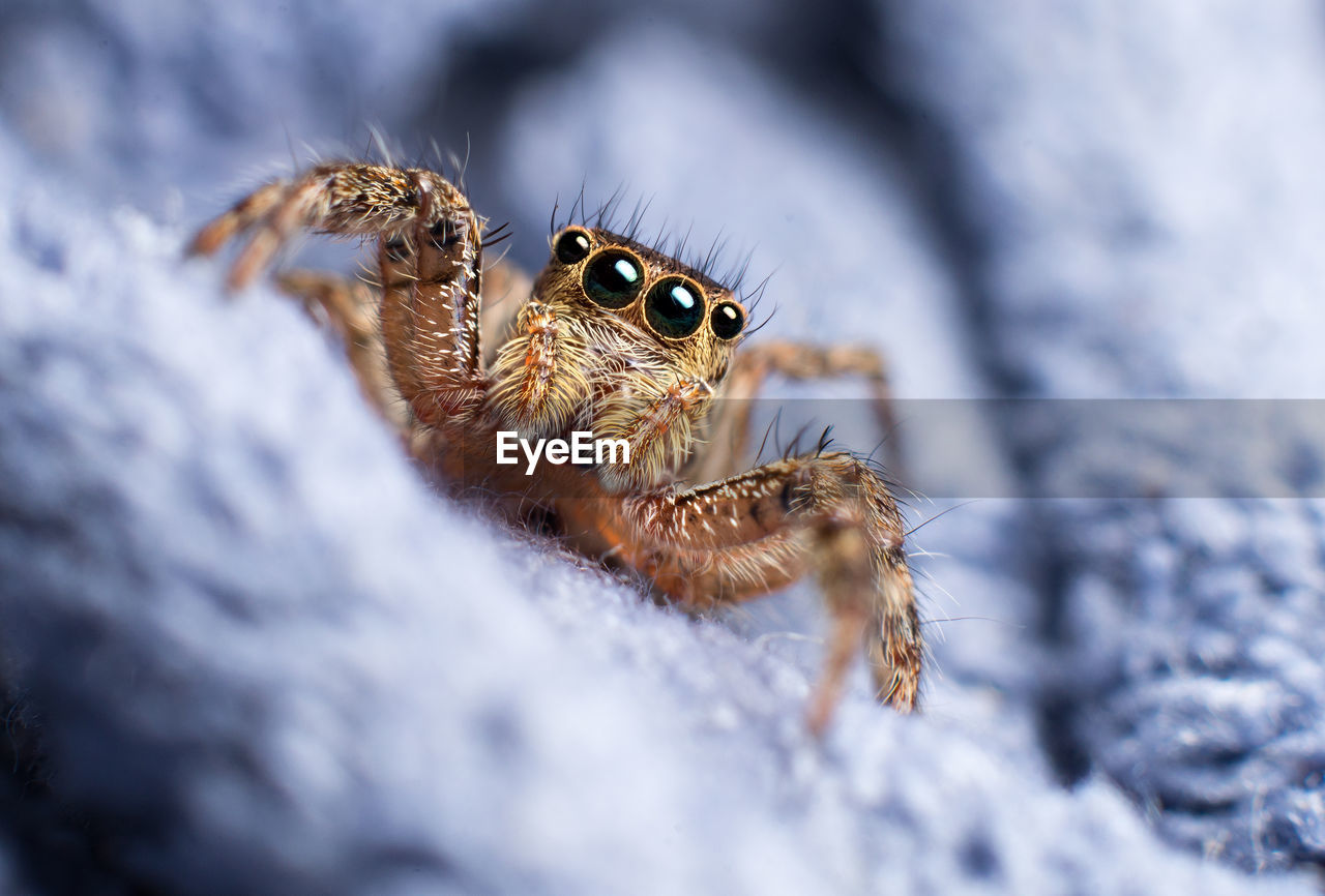 animal themes, animal wildlife, animals in the wild, animal, selective focus, one animal, close-up, nature, no people, jumping spider, arachnid, invertebrate, spider, day, arthropod, insect, winter, zoology, outdoors, animal body part, animal eye