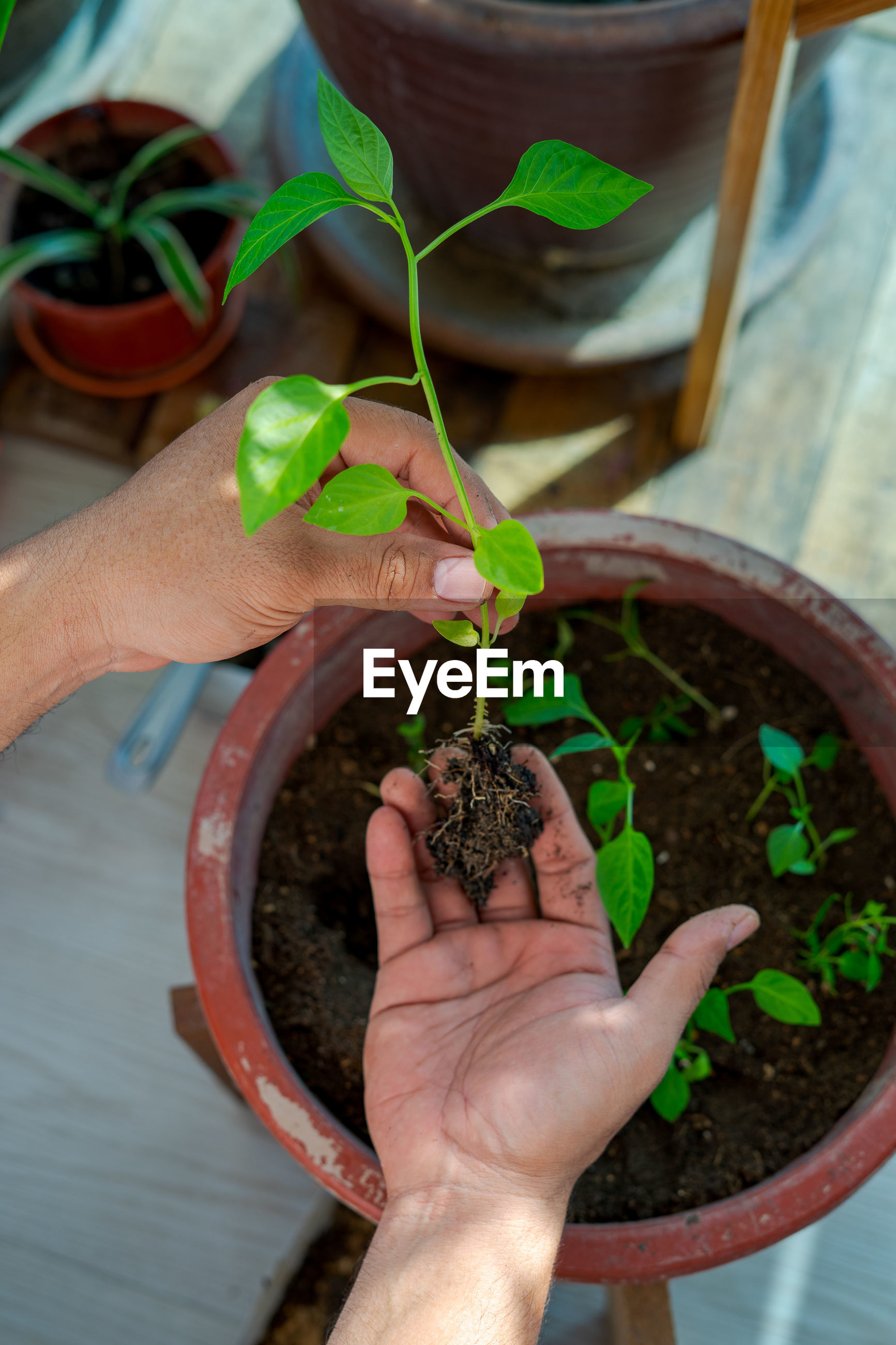 MIDSECTION OF PERSON HOLDING POTTED PLANT IN POT