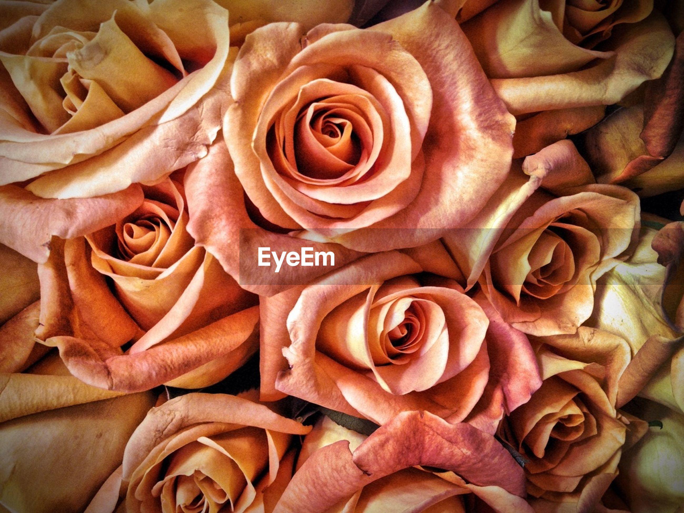 Detail shot of roses