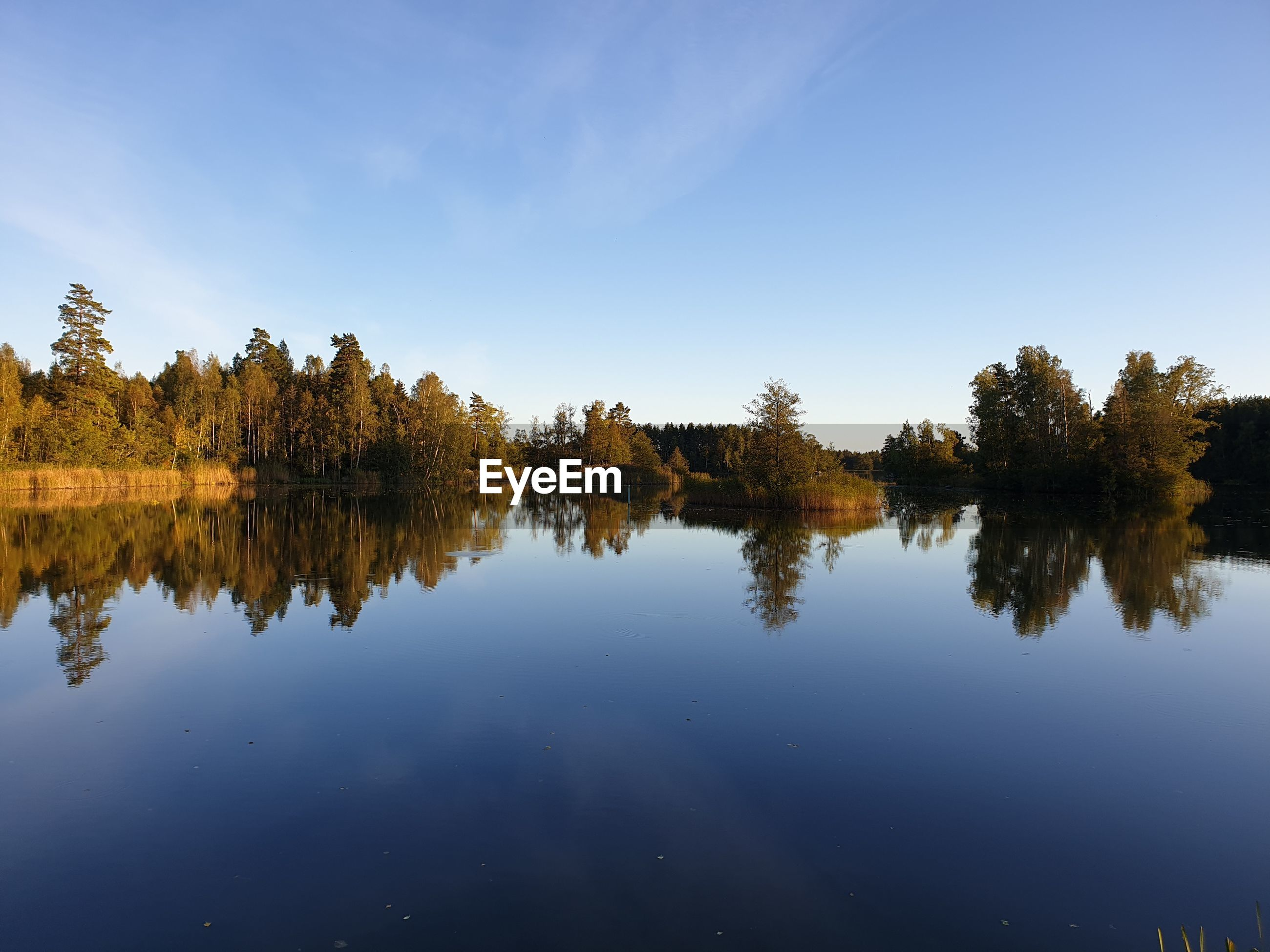 Reflection of trees in lake against blue sky