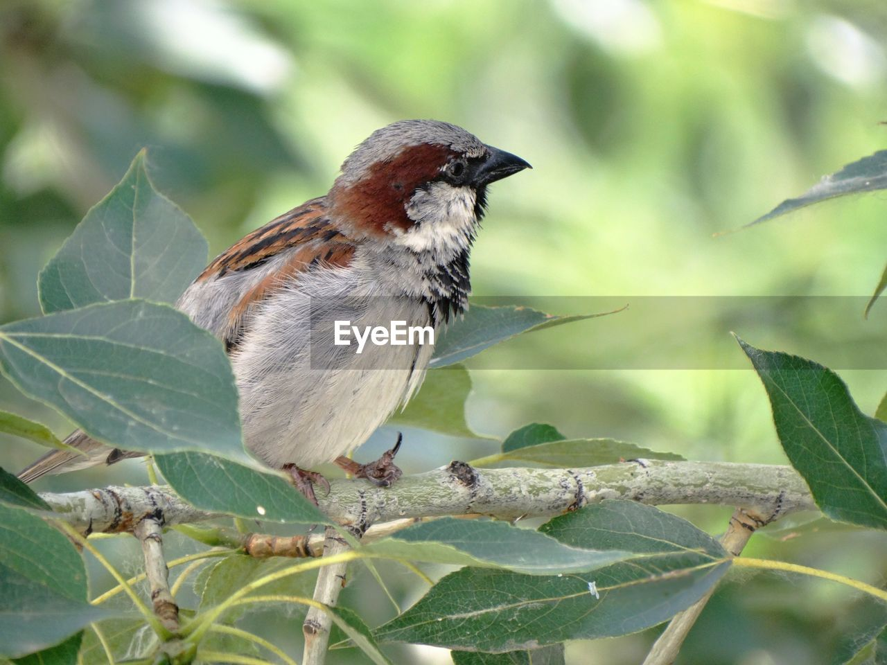 plant part, leaf, animal themes, animal, animal wildlife, animals in the wild, bird, vertebrate, one animal, perching, plant, close-up, nature, no people, tree, focus on foreground, day, branch, growth, sparrow