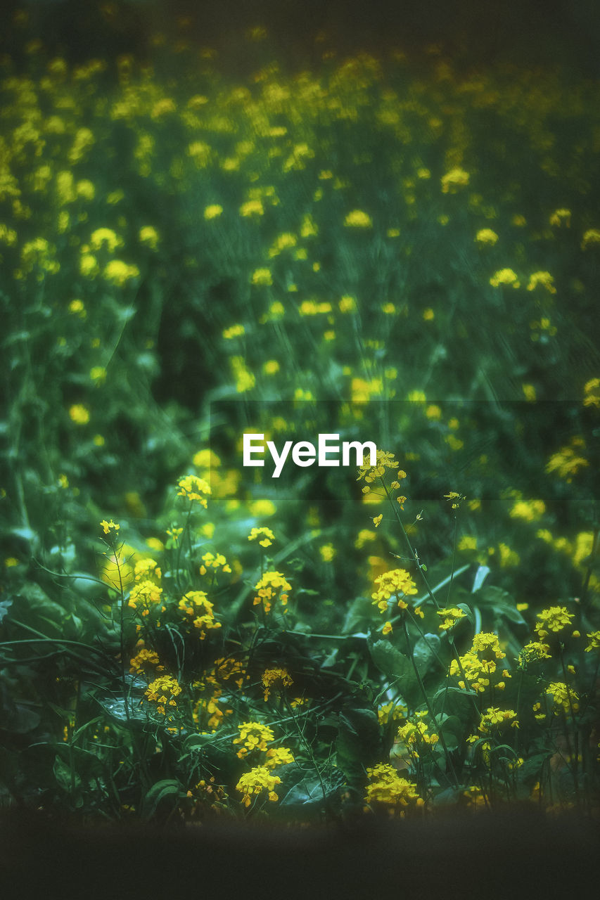 growth, nature, plant, yellow, flower, beauty in nature, no people, outdoors, freshness, day, fragility, close-up