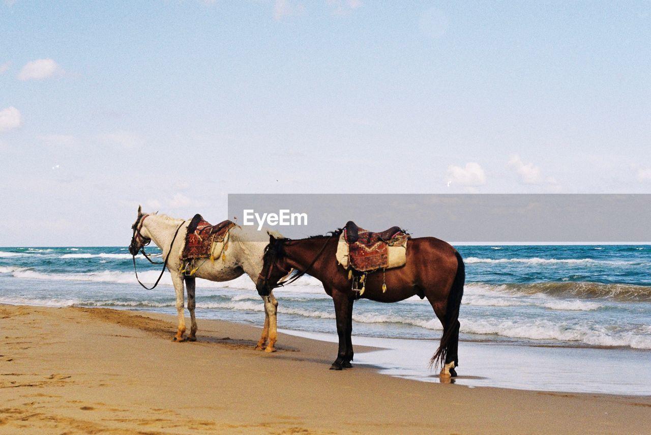 Horses At Beach Against Sky