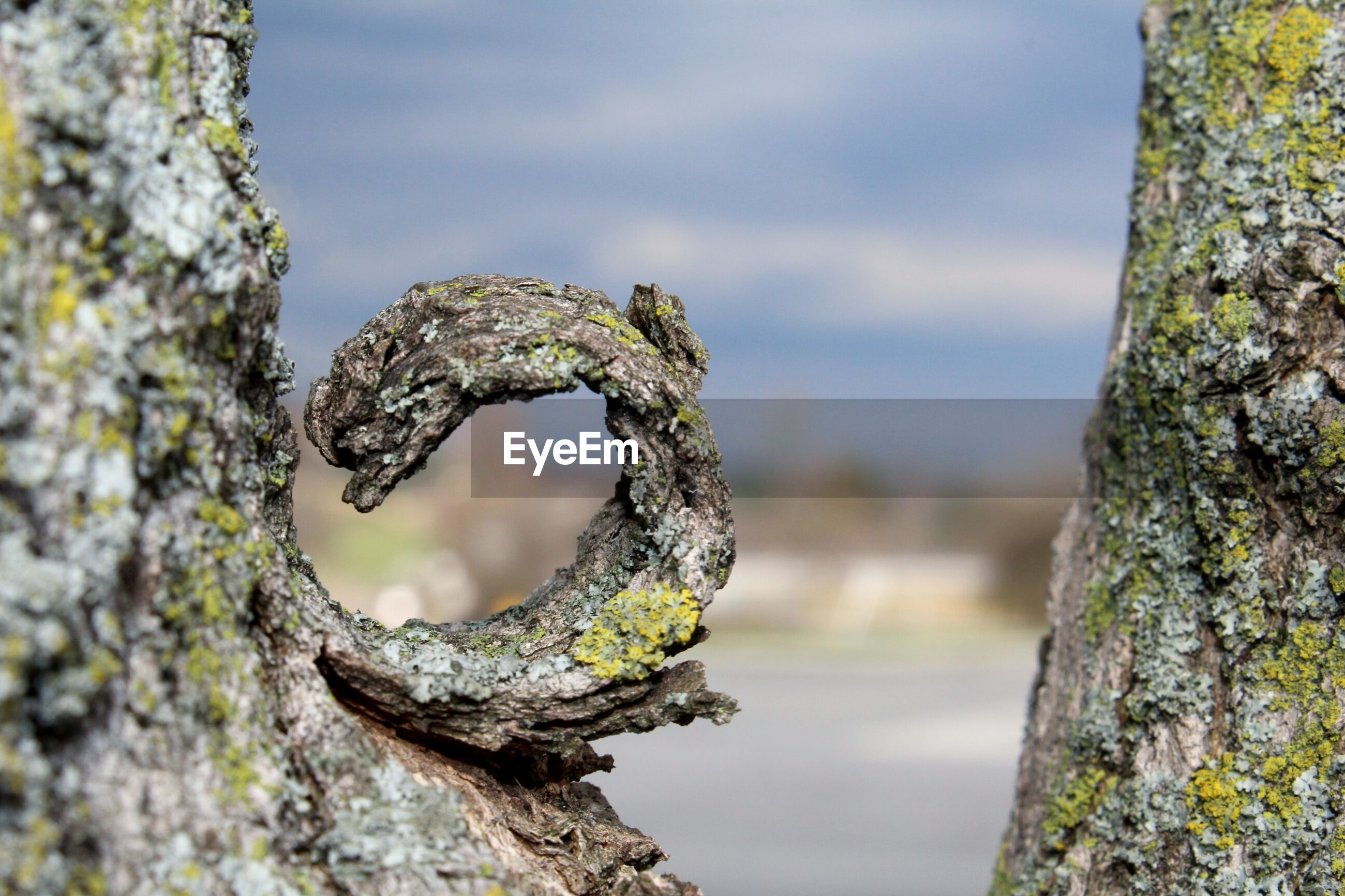 CLOSE-UP OF TREE TRUNK AGAINST THE SKY