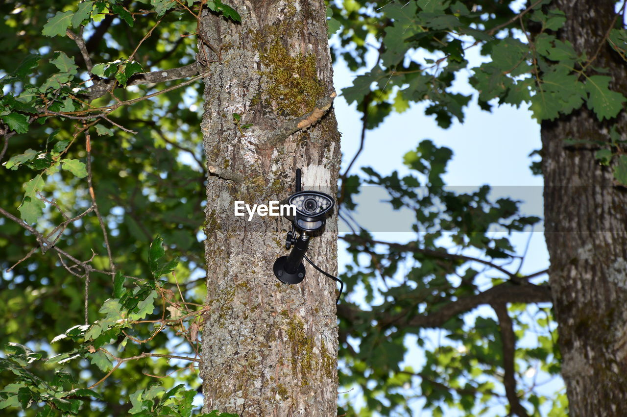 LOW ANGLE VIEW OF INSECT ON TREE