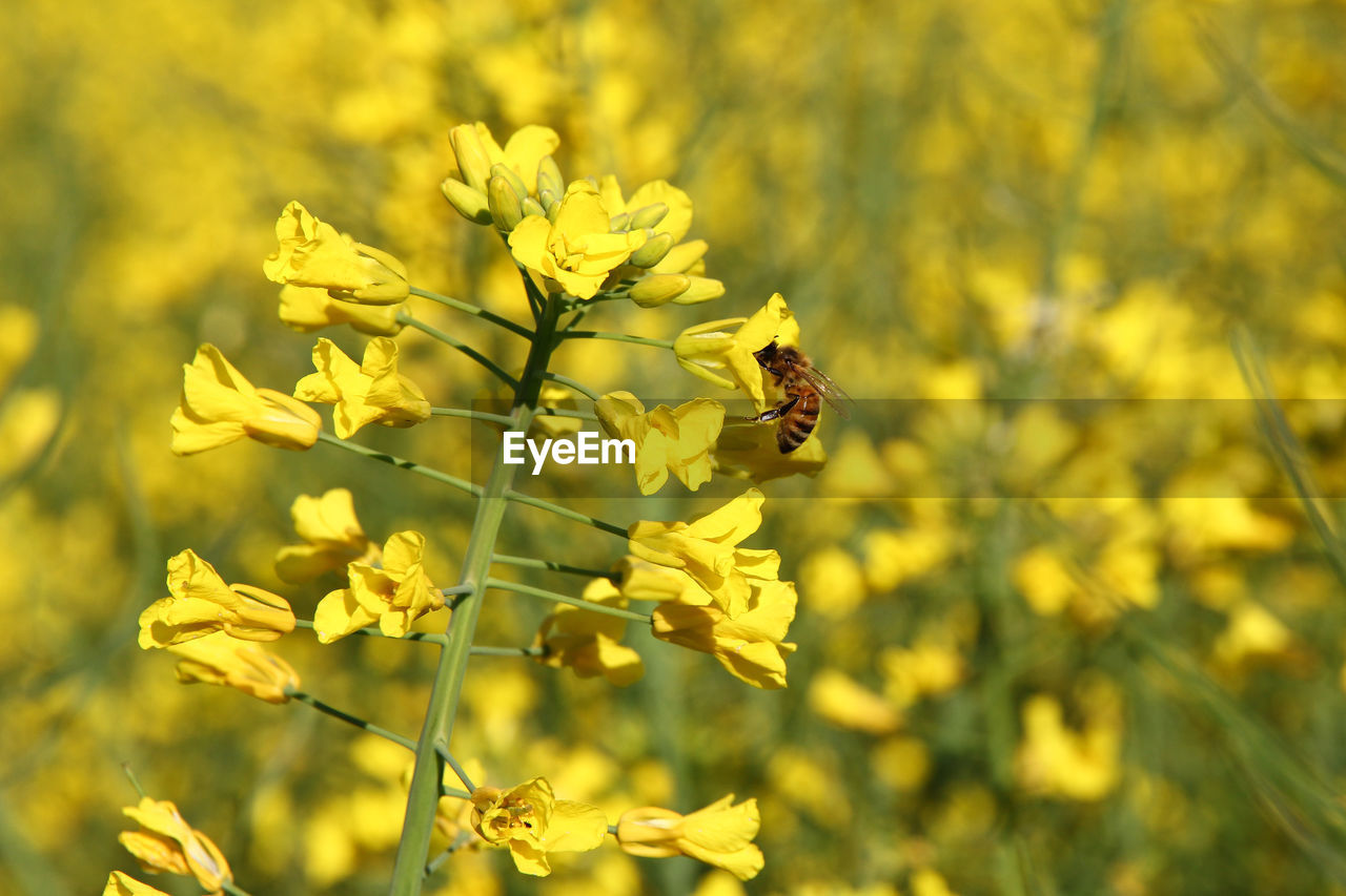flower, flowering plant, invertebrate, animal themes, animals in the wild, animal wildlife, animal, fragility, one animal, insect, vulnerability, plant, beauty in nature, growth, petal, bee, yellow, freshness, flower head, close-up, no people, pollination, outdoors