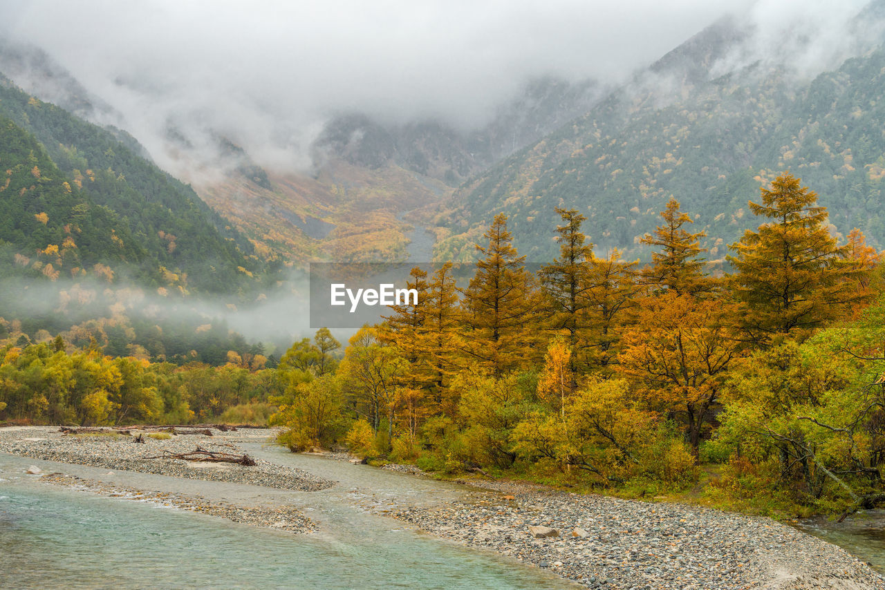 Scenic View Of Pine Trees By Mountains During Foggy Weather