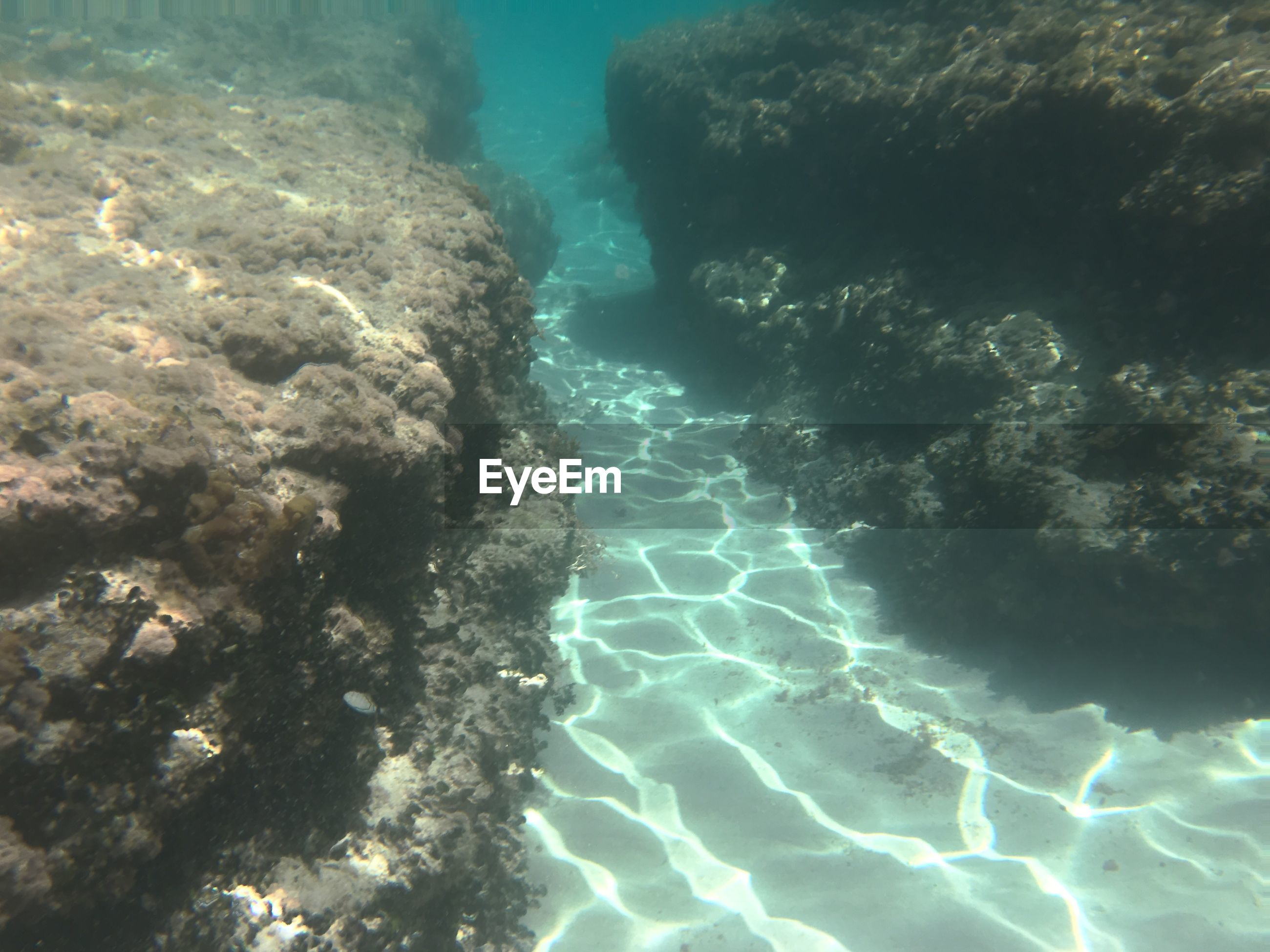 UNDERWATER VIEW OF SEA AND CORAL SWIMMING