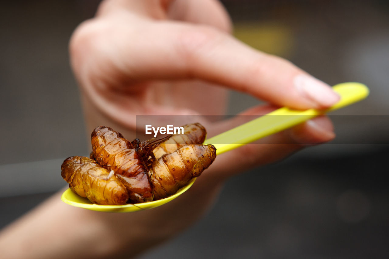 Cropped Hand Holding Spoon With Fried Maggots