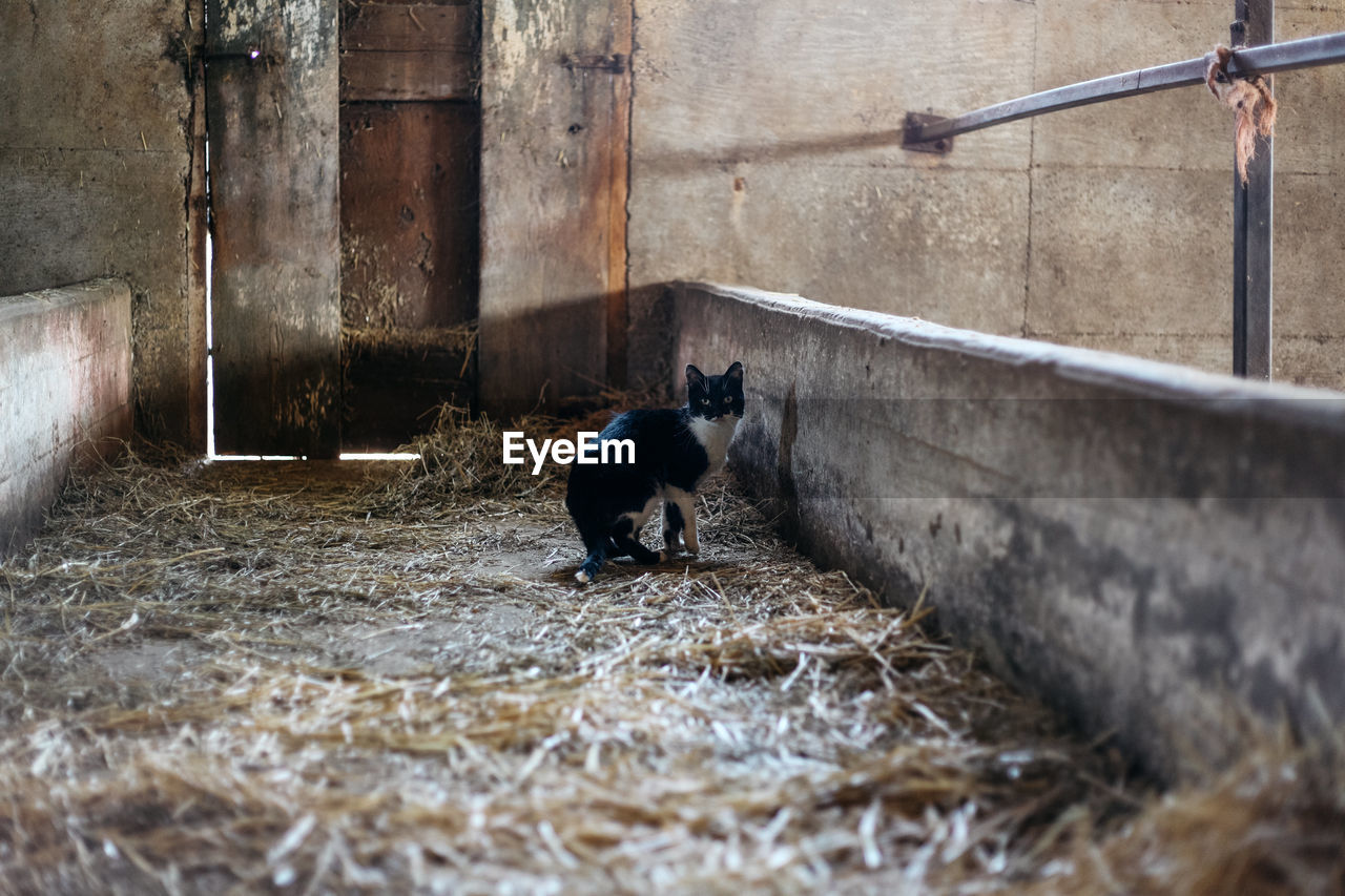 Cat In Stable