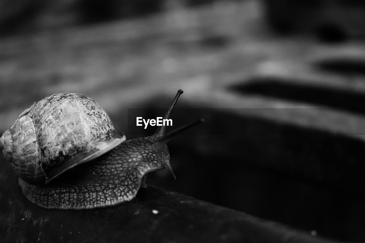 gastropod, animal themes, animal wildlife, snail, one animal, animal, mollusk, invertebrate, animals in the wild, animal antenna, close-up, shell, animal body part, animal shell, no people, boredom, slimy, crawling, nature, focus on foreground, small, marine