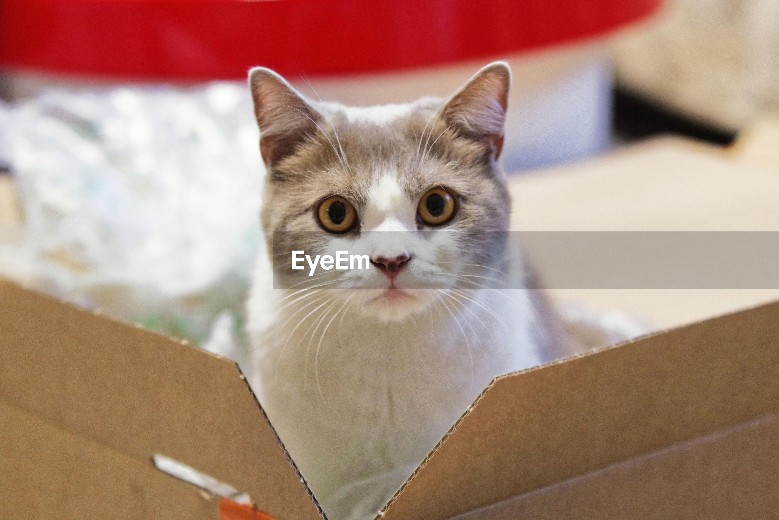 Portrait of cat in box