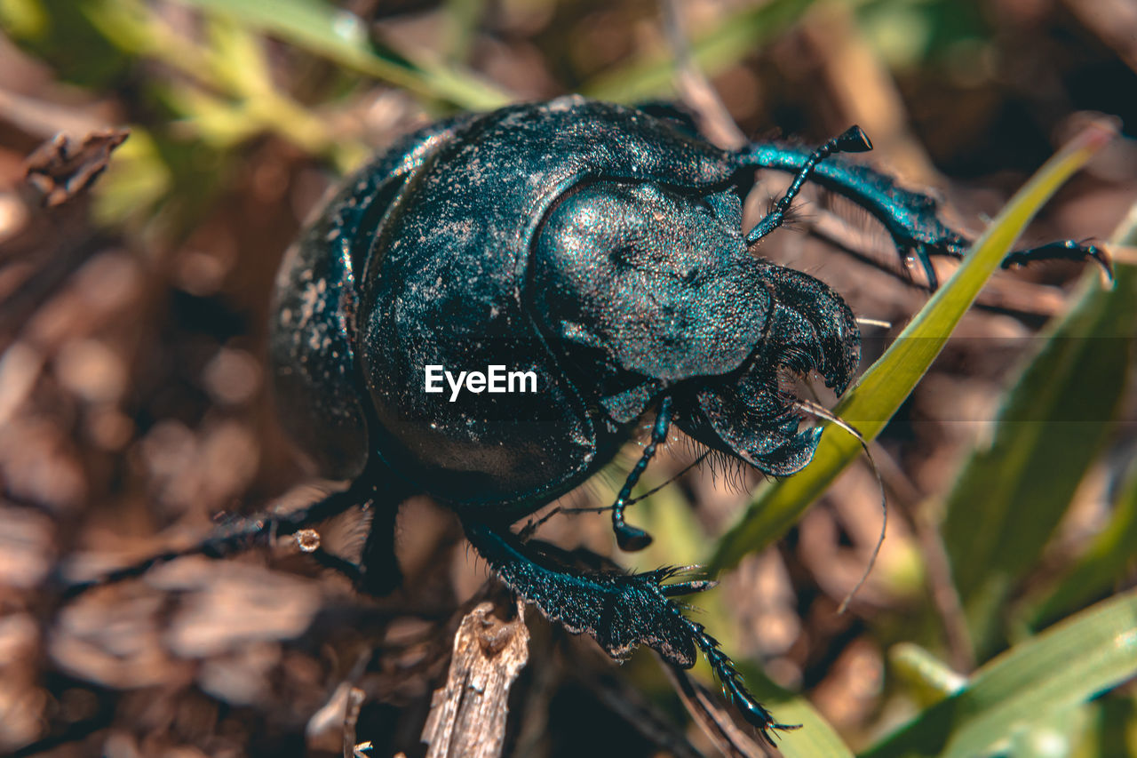 animals in the wild, animal wildlife, close-up, insect, animal themes, plant, nature, invertebrate, focus on foreground, no people, animal, one animal, day, beetle, outdoors, green color, tree, zoology, selective focus