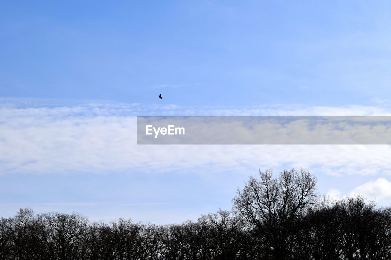 sky, low angle view, cloud - sky, nature, flying, beauty in nature, outdoors, bird, mid-air, one animal, day, tranquility, scenics, animals in the wild, no people, animal themes, tree