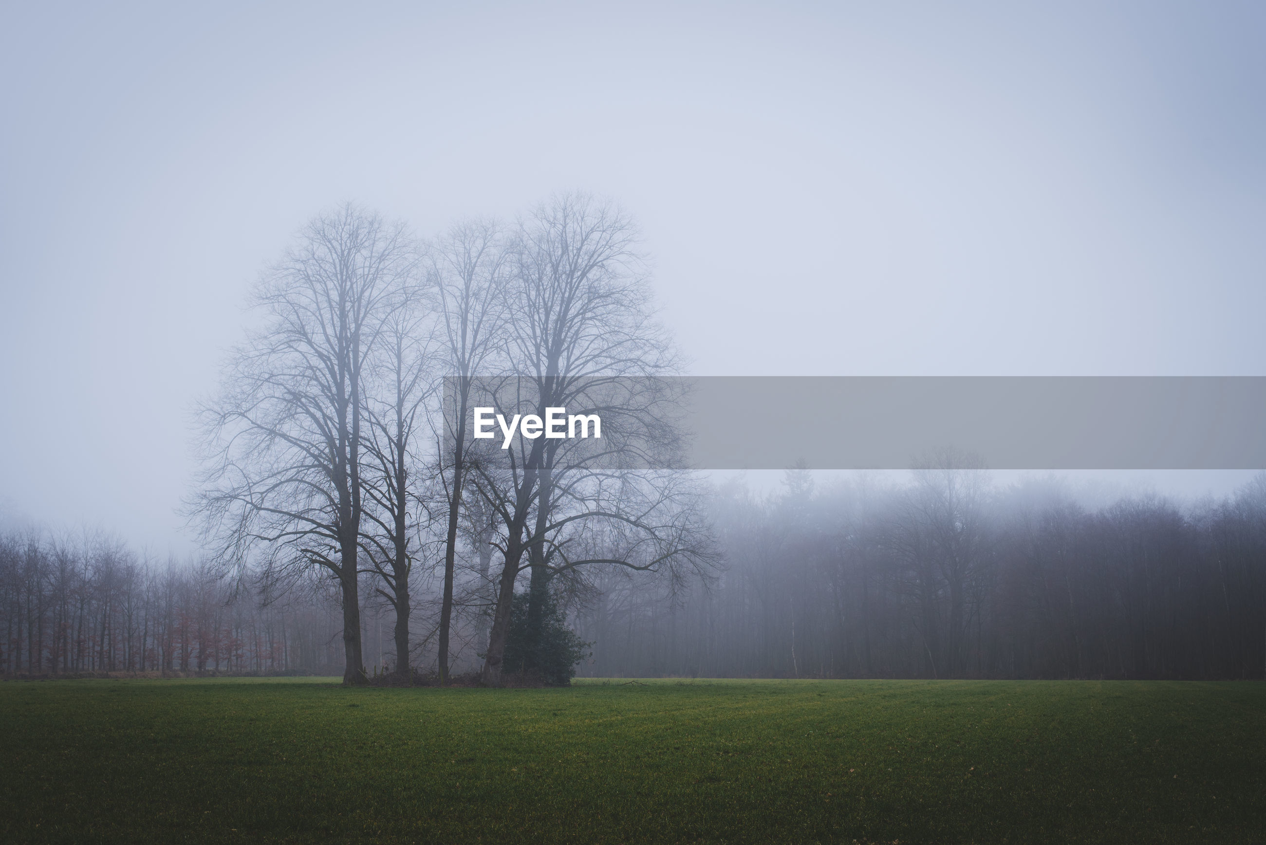 BARE TREES ON FOGGY LANDSCAPE