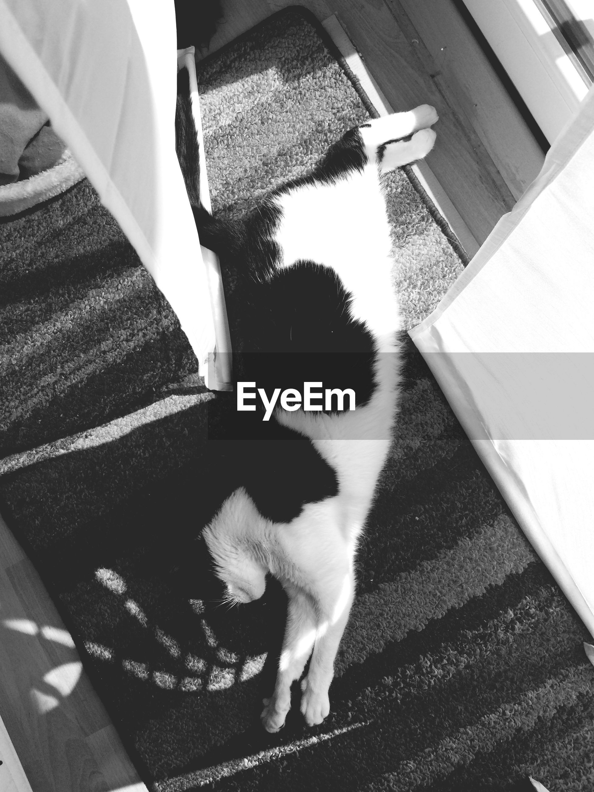 pets, domestic animals, domestic cat, one animal, mammal, cat, animal themes, feline, relaxation, high angle view, sitting, indoors, sunlight, dog, resting, whisker, built structure, architecture, shadow, steps