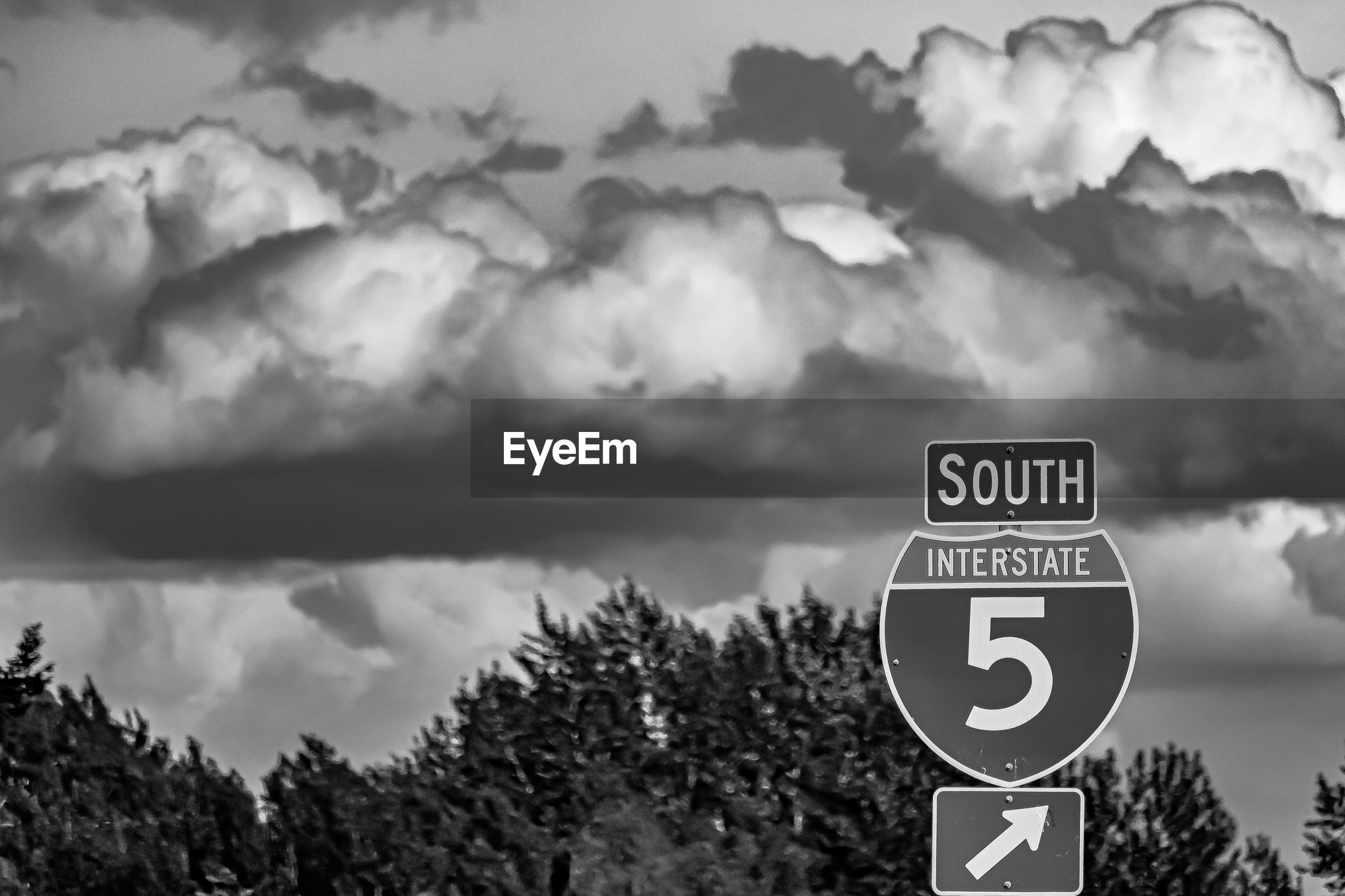 communication, sign, sky, text, tree, cloud - sky, plant, information, nature, road sign, information sign, no people, guidance, focus on foreground, western script, day, road, arrow symbol, close-up, outdoors