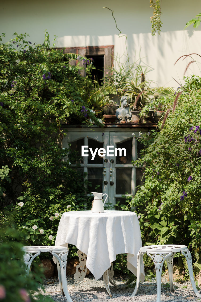 plant, nature, tree, growth, no people, day, seat, table, chair, front or back yard, white color, green color, hanging, potted plant, architecture, outdoors, clothing, building exterior, tablecloth, building, setting