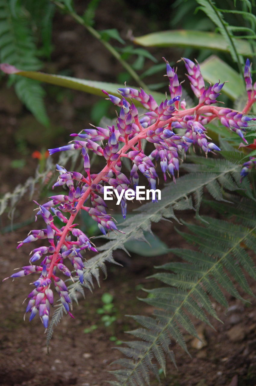 flower, purple, plant, nature, growth, fragility, beauty in nature, no people, outdoors, day, blooming, close-up, freshness, flower head