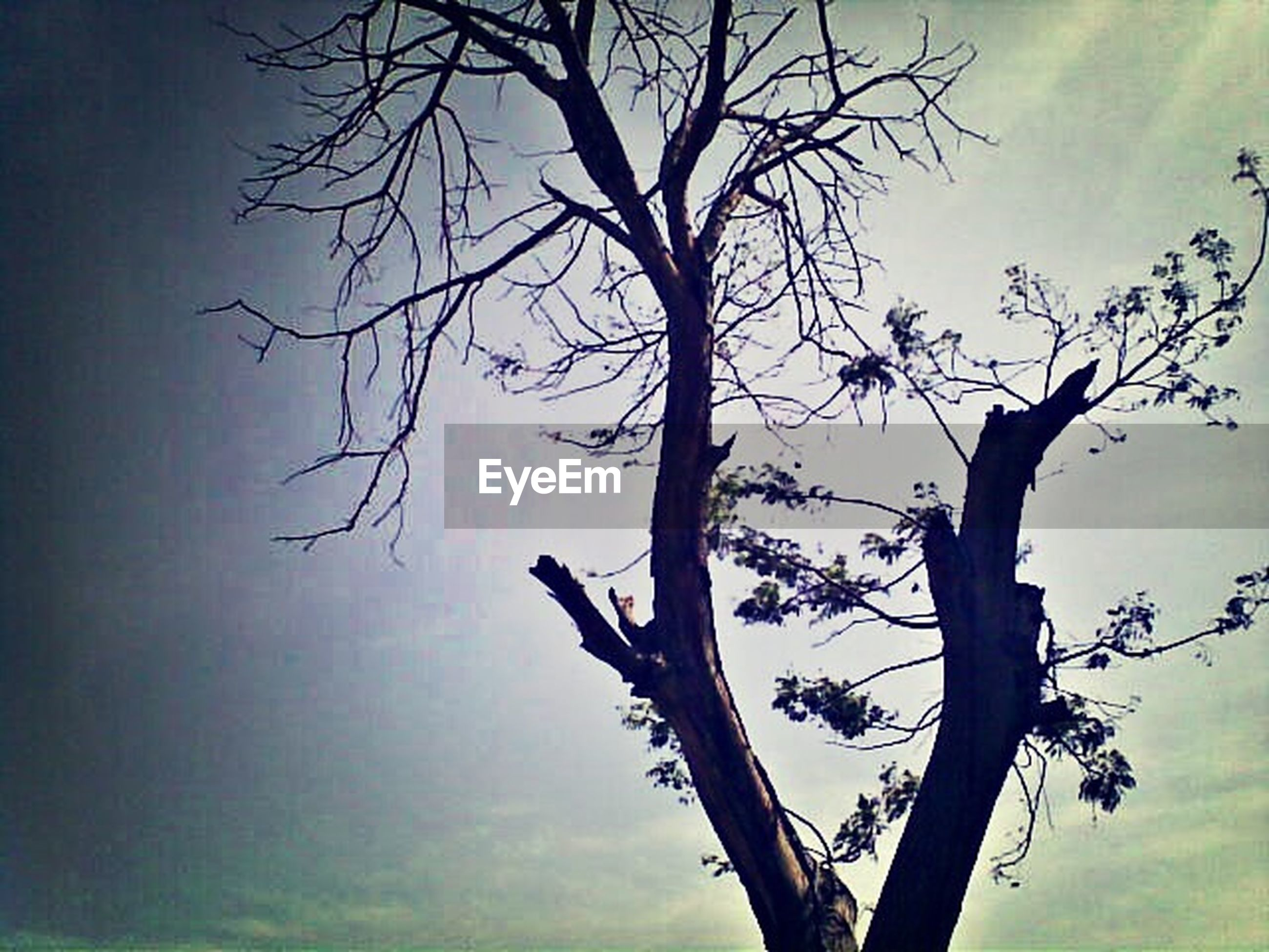 bare tree, branch, tree, sky, tranquility, nature, tree trunk, low angle view, dead plant, silhouette, beauty in nature, tranquil scene, scenics, growth, cloud - sky, outdoors, no people, dusk, dried plant, single tree
