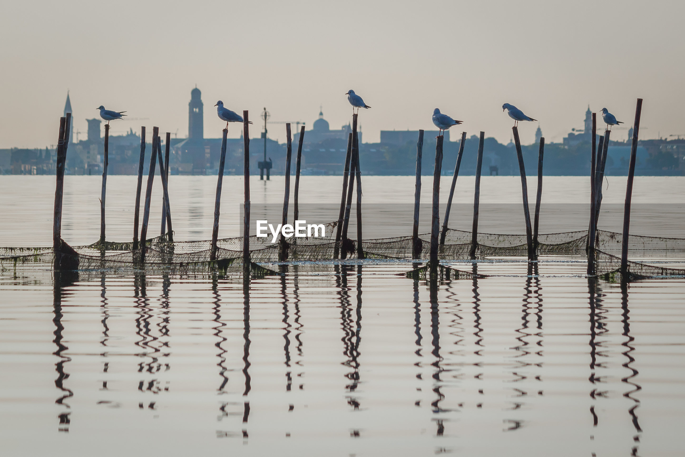 VIEW OF WOODEN POSTS IN THE SEA