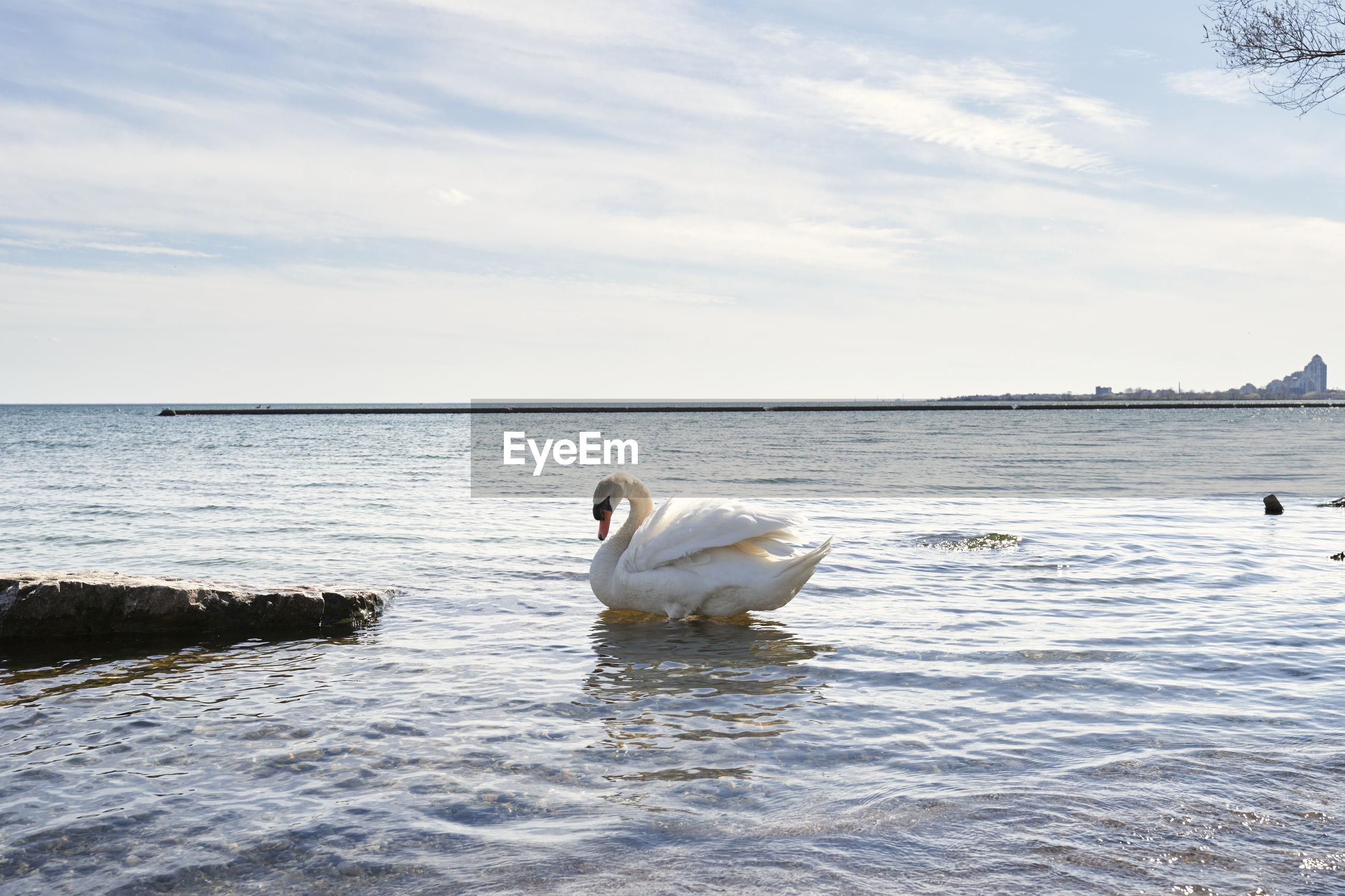 SWANS SWIMMING IN SEA AGAINST SKY