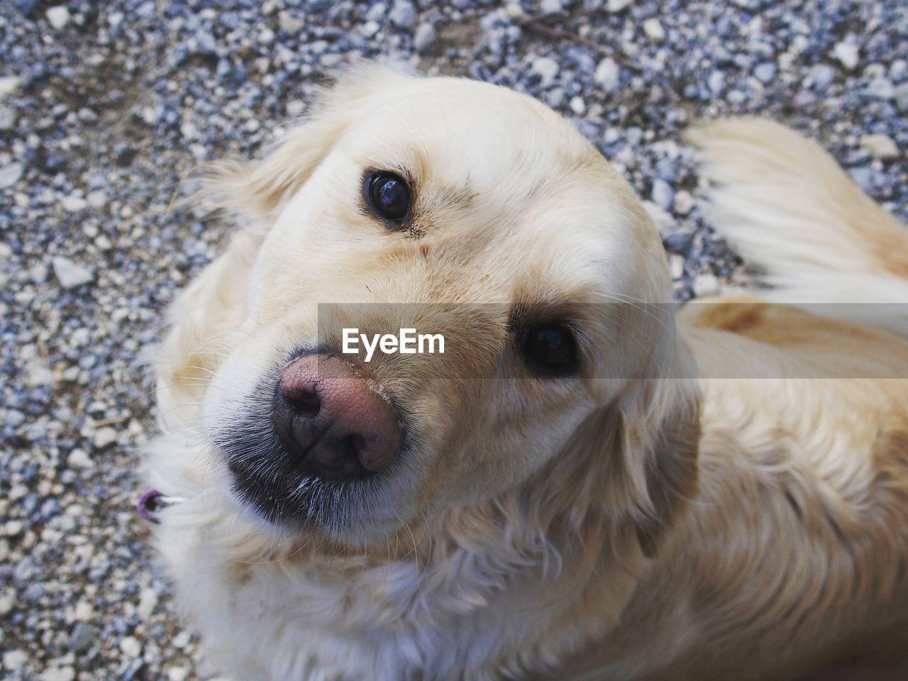 Directly above portrait shot of dog