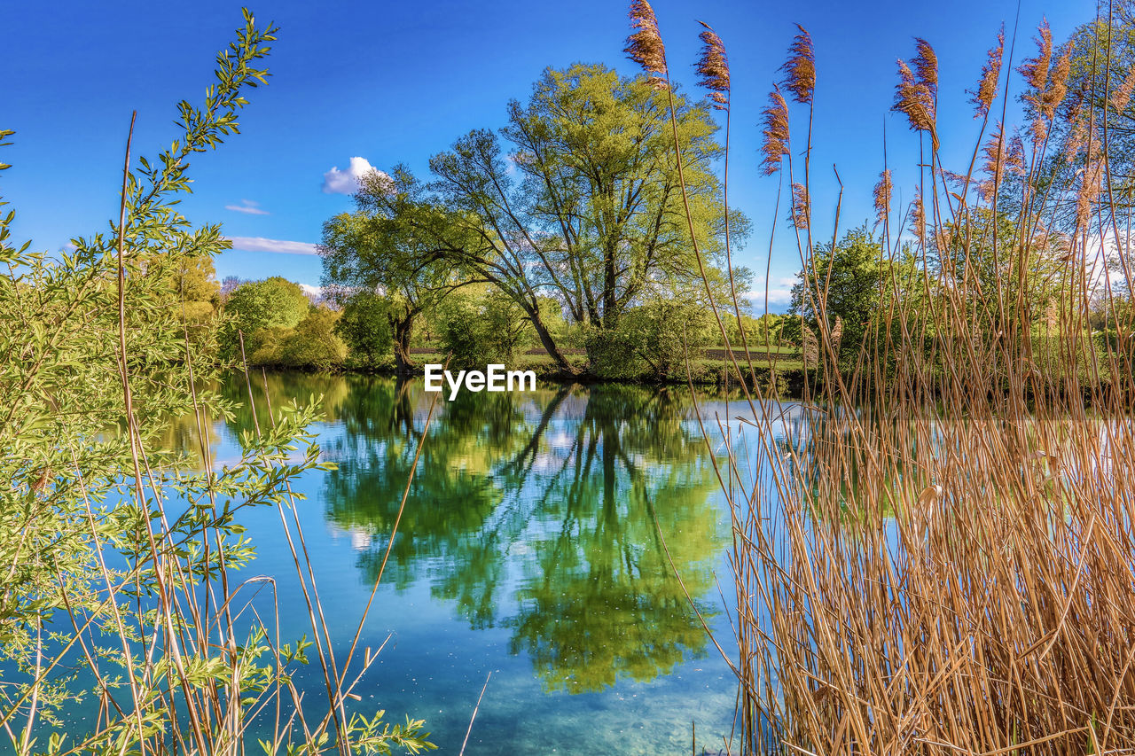 lake, reflection, water, nature, tree, tranquil scene, tranquility, beauty in nature, outdoors, scenics, no people, growth, plant, day, grass, sky