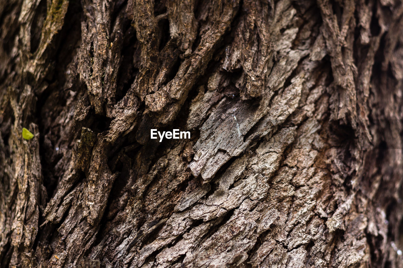 tree trunk, tree, trunk, textured, rough, close-up, backgrounds, plant bark, plant, wood - material, pattern, full frame, natural pattern, bark, focus on foreground, no people, brown, nature, day, selective focus, outdoors, textured effect, natural condition