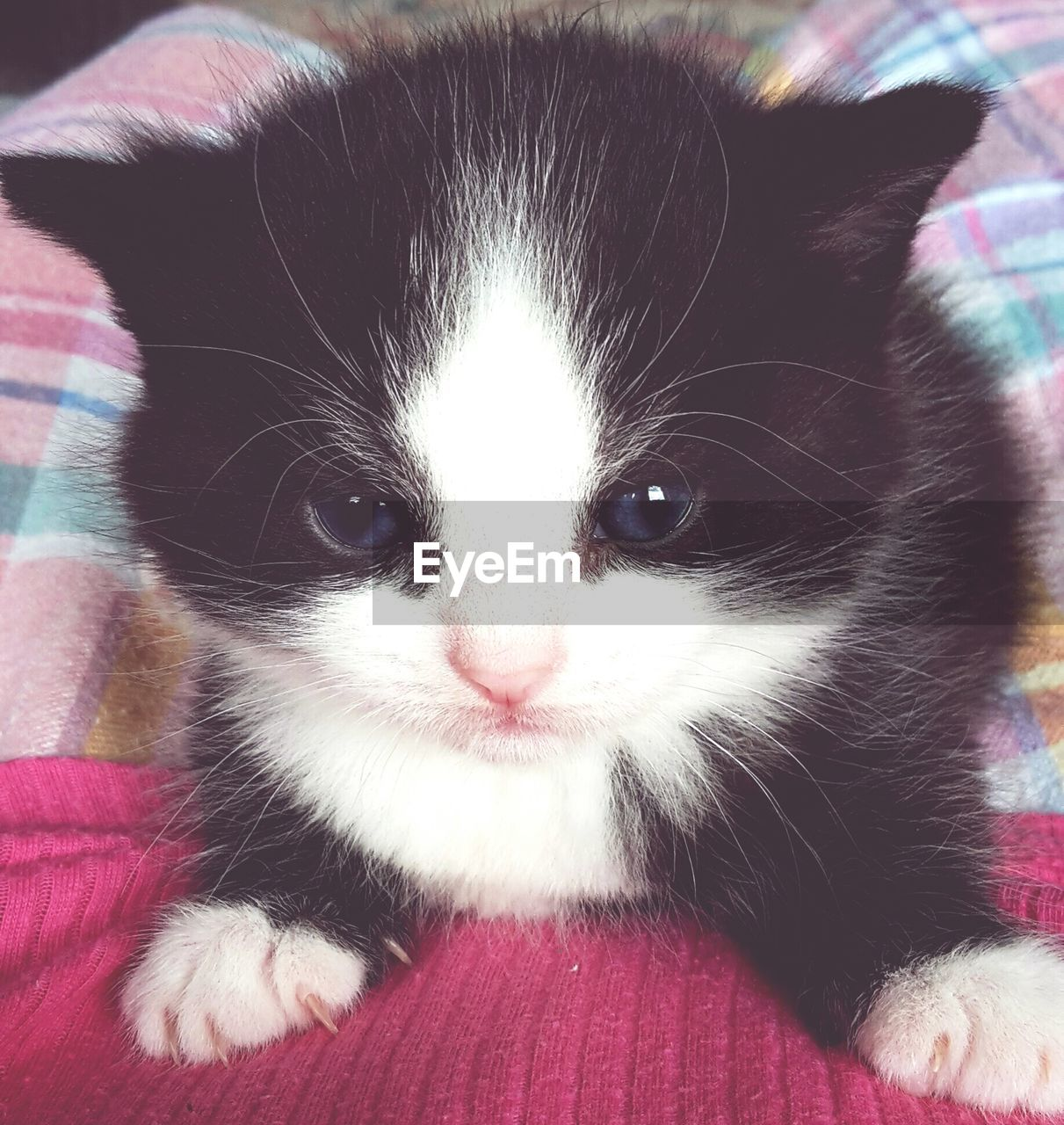 Close-up of kitten on bed