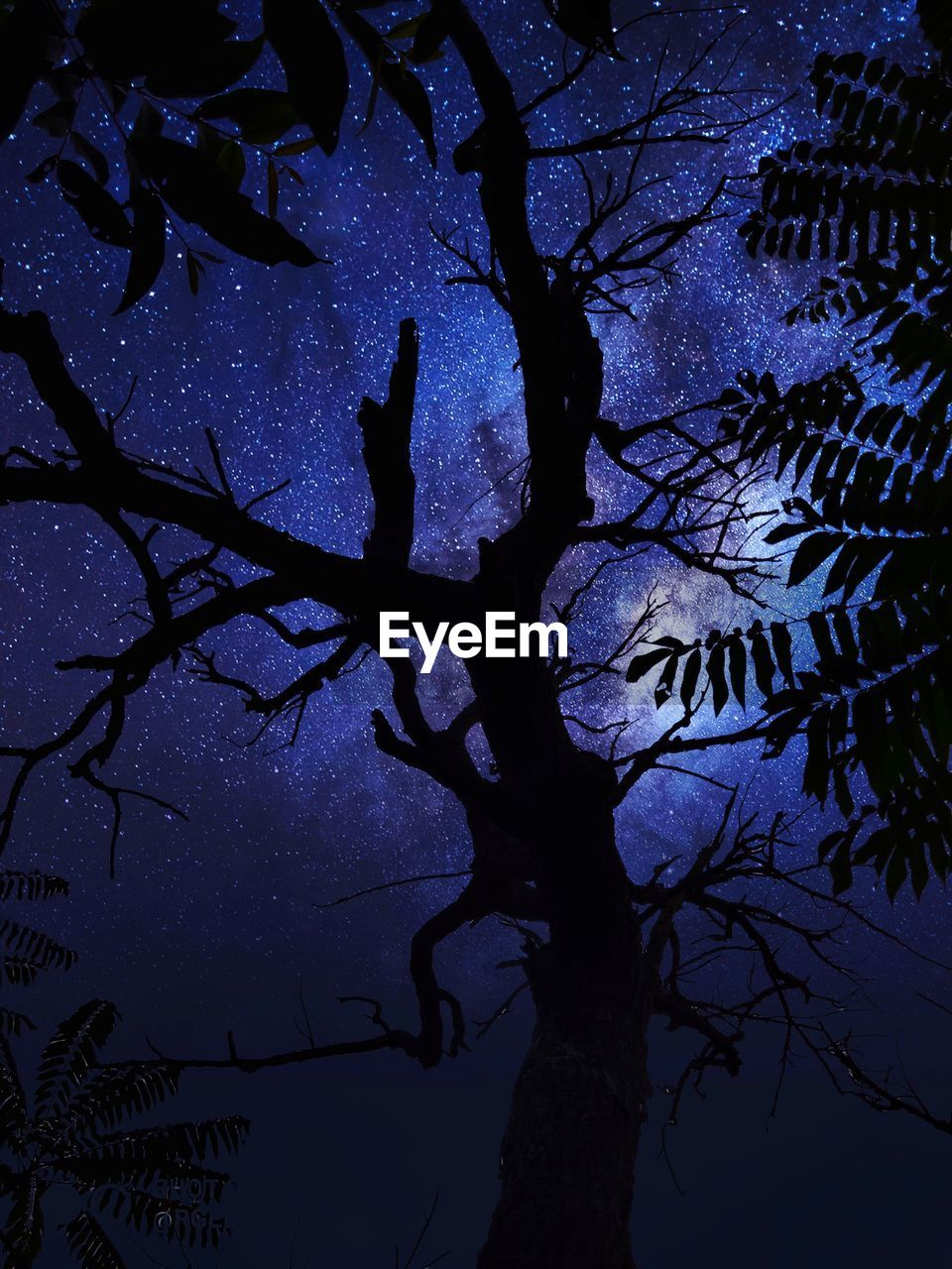 LOW ANGLE VIEW OF BARE TREE AT NIGHT