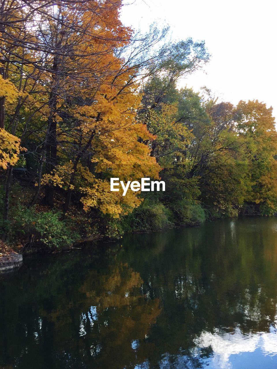 tree, nature, autumn, beauty in nature, change, tranquility, scenics, reflection, tranquil scene, growth, water, leaf, outdoors, idyllic, no people, lake, day, forest, sky
