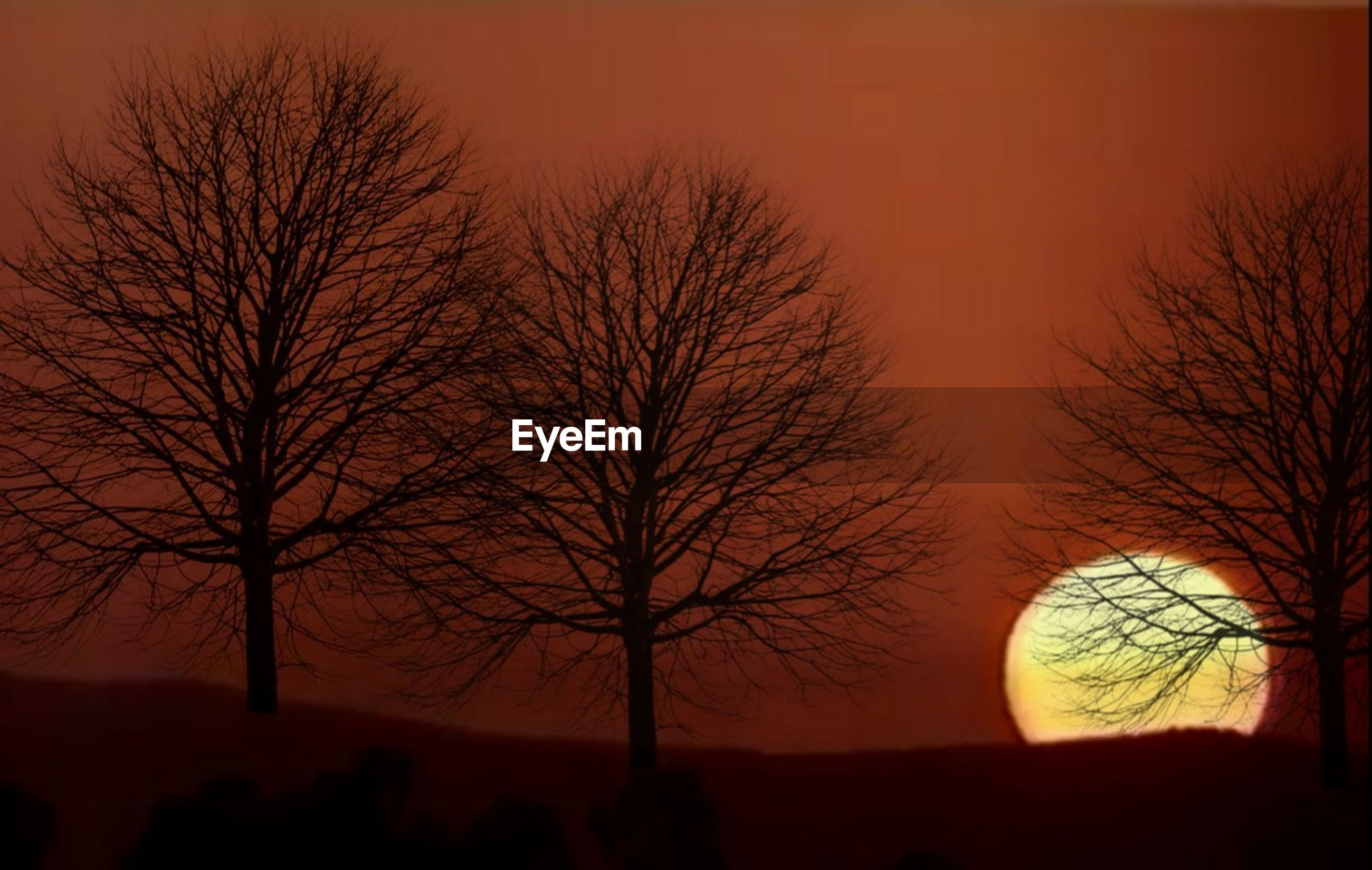 tree, bare tree, plant, silhouette, branch, sky, night, nature, no people, dusk, twilight, sunset, landscape, outdoors, environment, scenics - nature, winter, beauty in nature, dark, textured effect