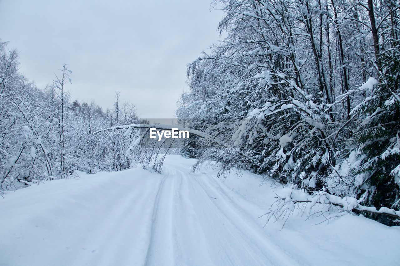 snow, cold temperature, winter, tree, plant, white color, beauty in nature, nature, covering, no people, transportation, land, tranquility, scenics - nature, tranquil scene, road, the way forward, day, environment, snowing, snowcapped mountain