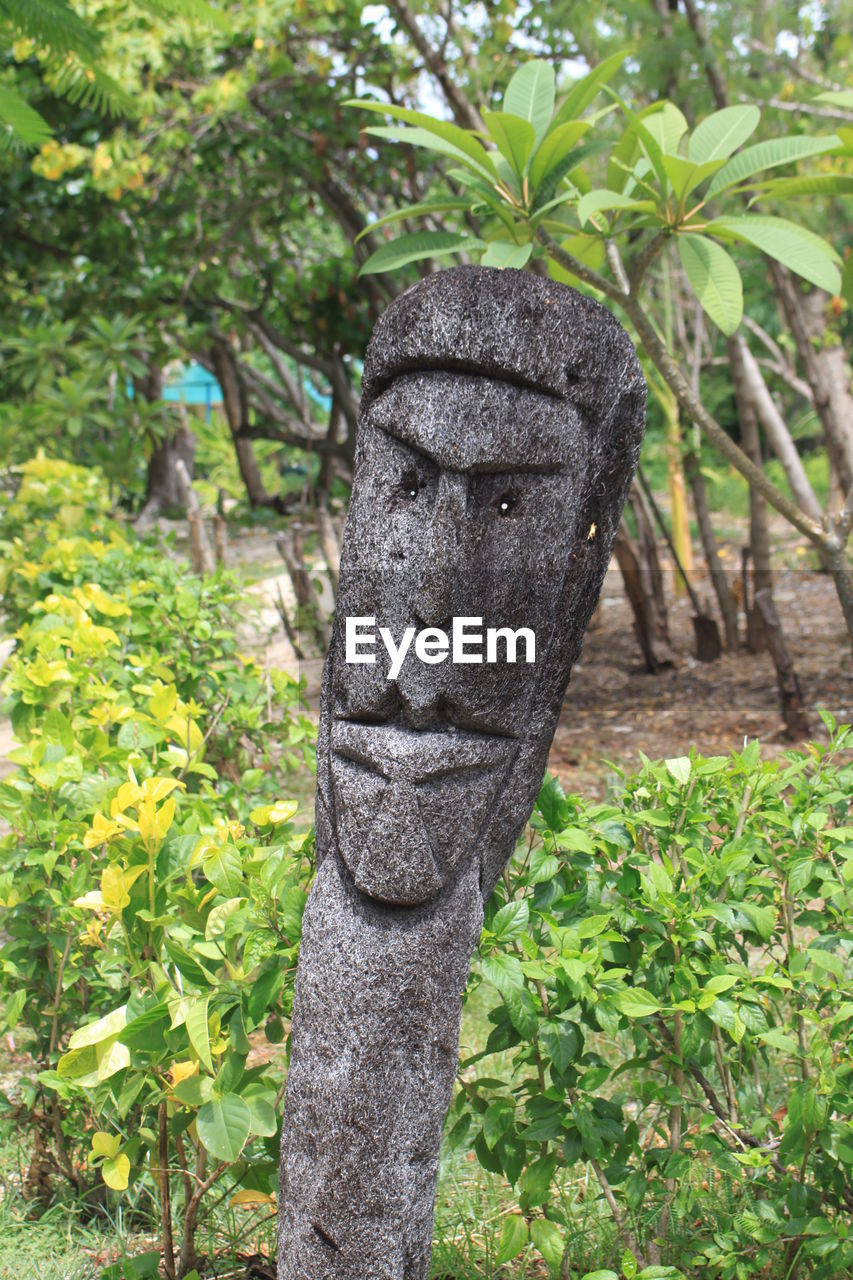 Decorative tiki iki head carved from trunk of palm tree. Animal Themes Animals In The Wild Beauty In Nature Carved Close-up Day Fiji Fiji Islands Green Color Growth Leaf Nature No People Outdoors Palm Tree Plant South Pacific Tiki Iki Head Tourism Tradition Tree
