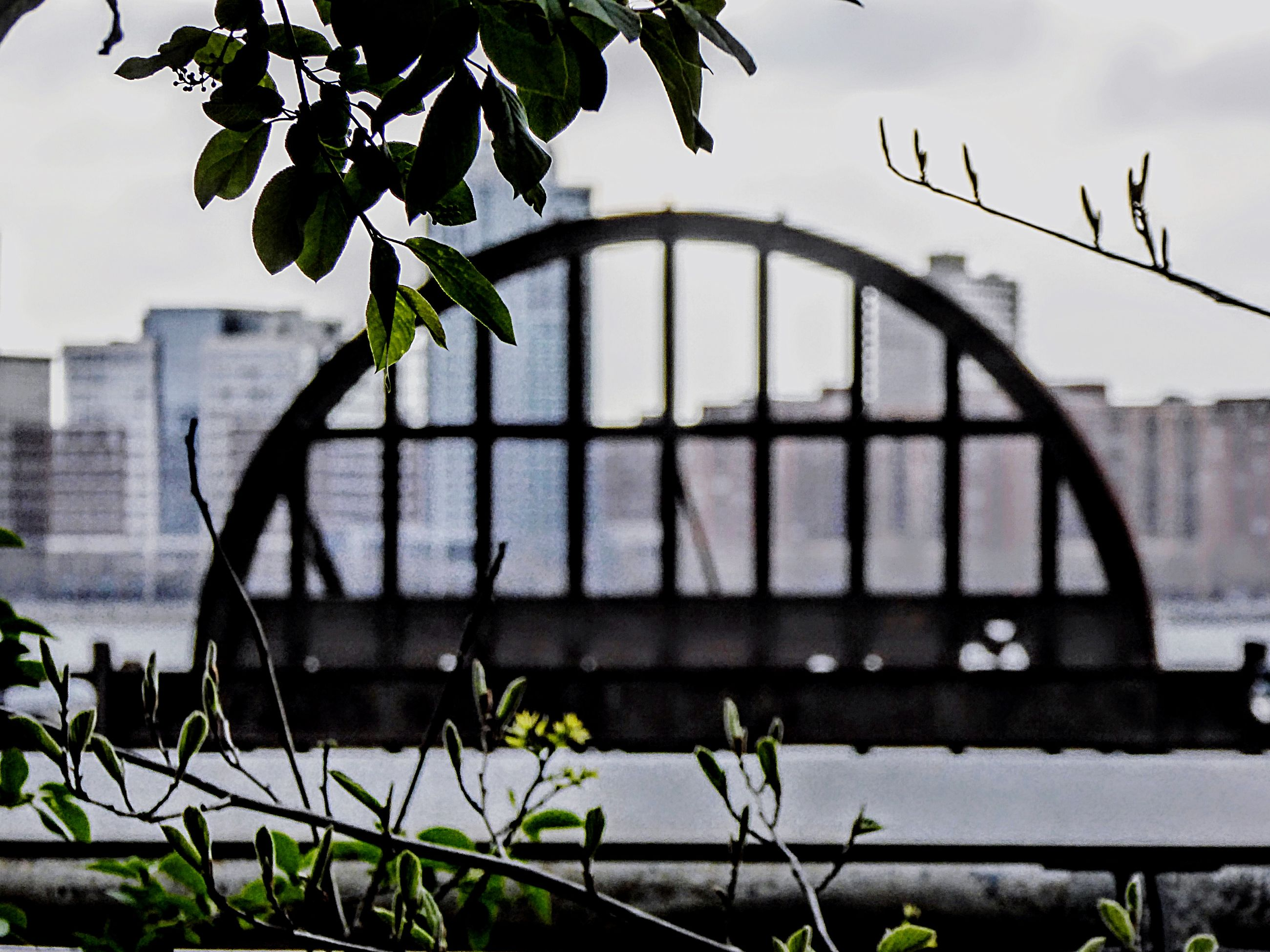 CLOSE-UP OF PLANT AGAINST RIVER AND BUILDINGS
