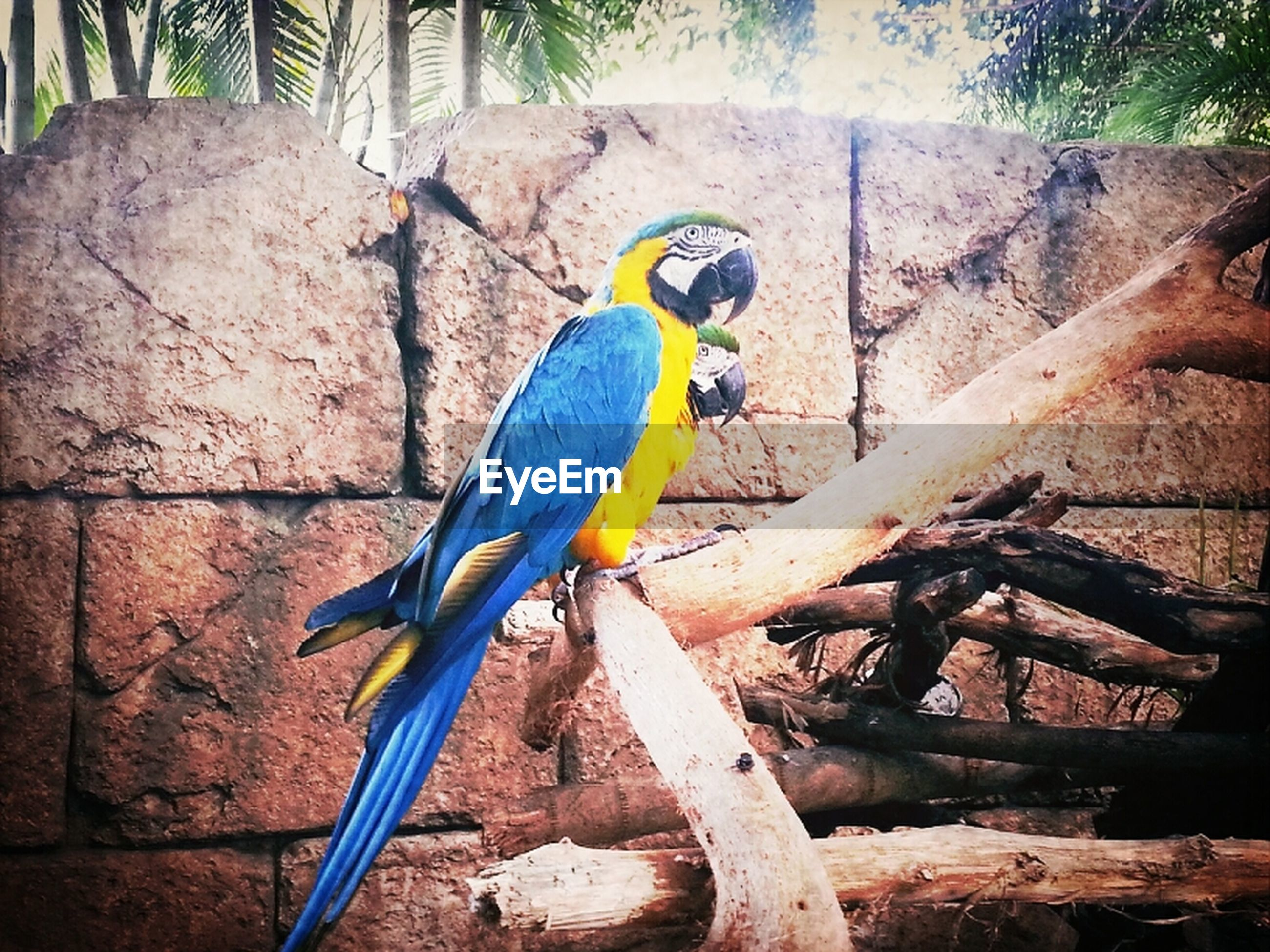 one animal, animal themes, animals in the wild, bird, wildlife, full length, tree, yellow, perching, day, sunlight, outdoors, tree trunk, branch, side view, no people, nature, parrot, blue, wood - material