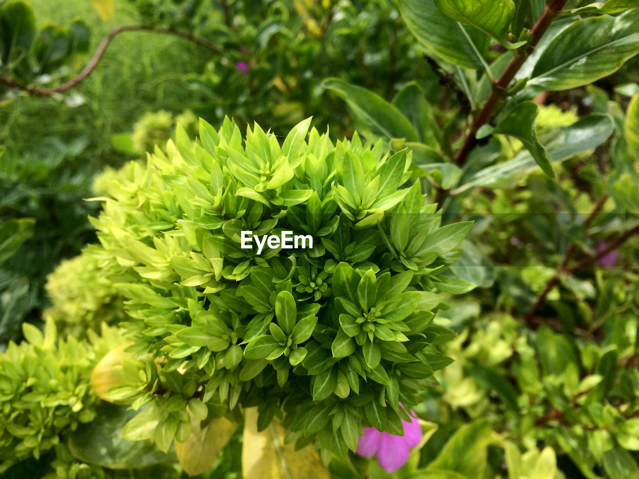 plant, growth, green color, beauty in nature, plant part, leaf, close-up, nature, focus on foreground, day, flower, no people, freshness, flowering plant, outdoors, fragility, vulnerability, tranquility, park, selective focus, herb, leaves