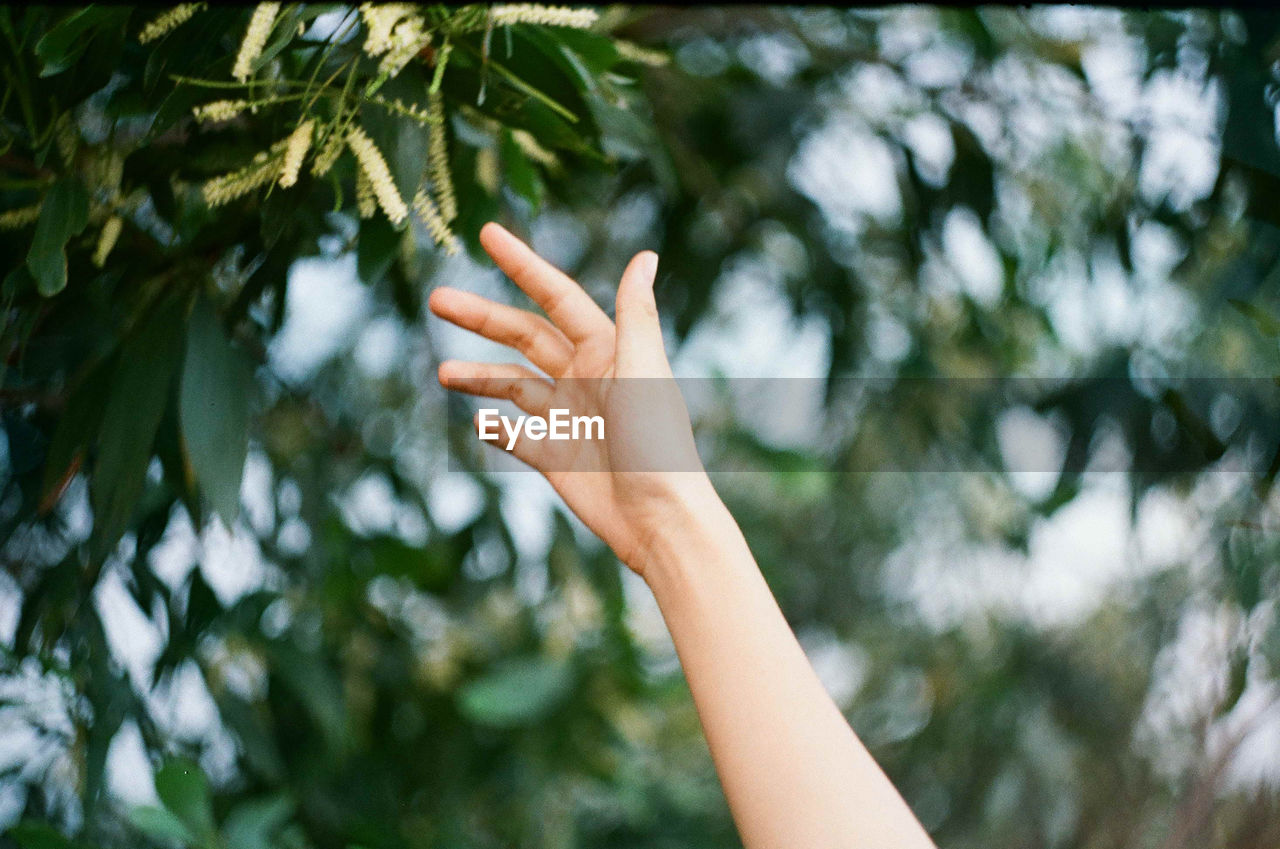 Cropped image of hand reaching towards twig