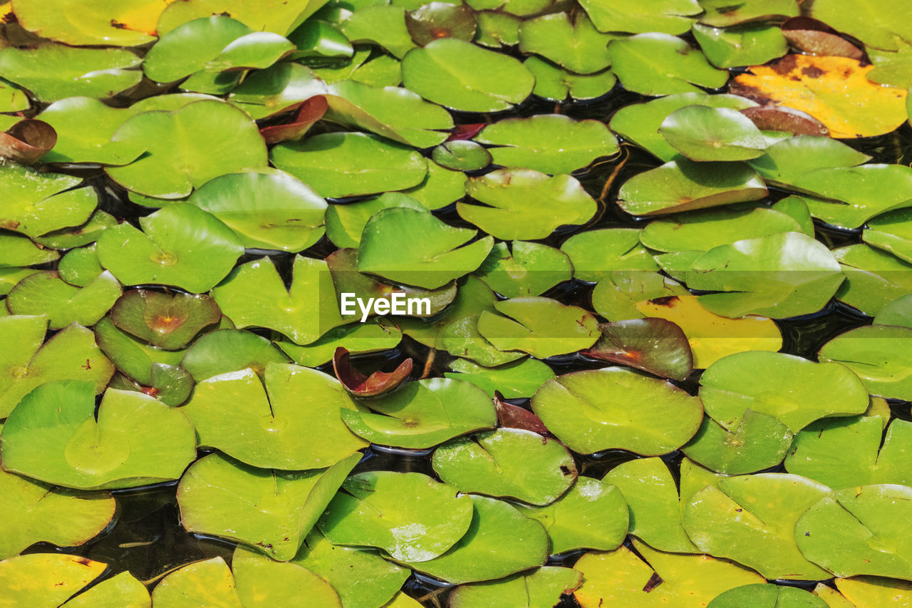 leaf, plant part, green color, water, lake, nature, water lily, floating, no people, plant, full frame, beauty in nature, day, growth, leaves, floating on water, high angle view, close-up, outdoors
