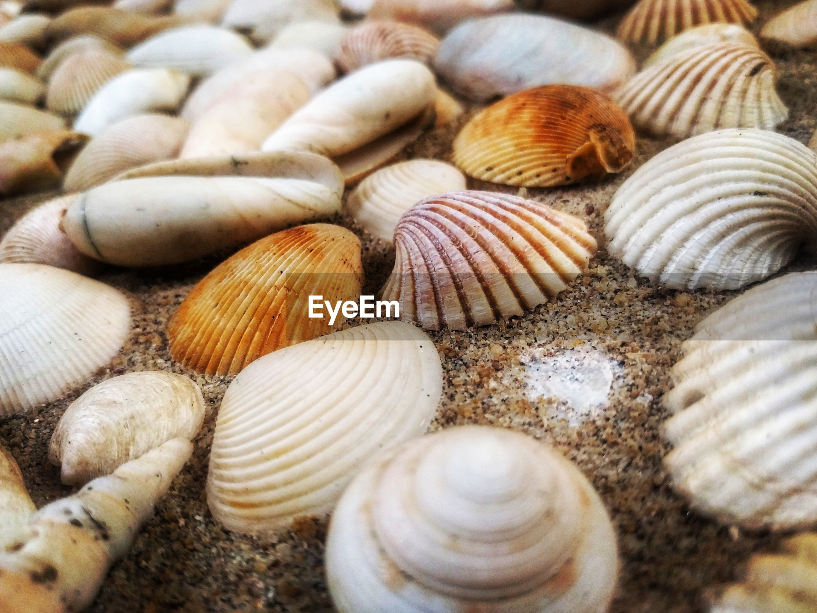 large group of objects, abundance, clam, backgrounds, seashell, high angle view, full frame, scallop, no people, outdoors, close-up, day