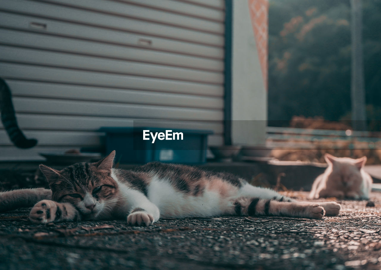 cat, domestic cat, domestic, pets, feline, domestic animals, animal themes, mammal, animal, vertebrate, one animal, relaxation, no people, lying down, resting, whisker, selective focus, architecture, looking at camera, house, surface level