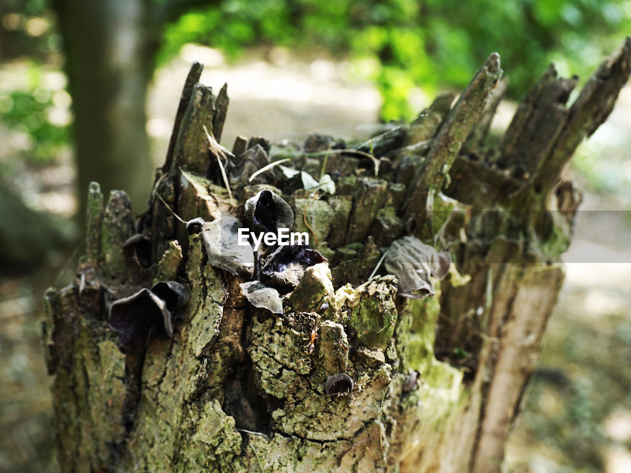 tree, nature, plant, close-up, no people, day, animal wildlife, trunk, focus on foreground, animal, tree trunk, selective focus, animals in the wild, wood - material, animal themes, land, outdoors, bark, growth, textured