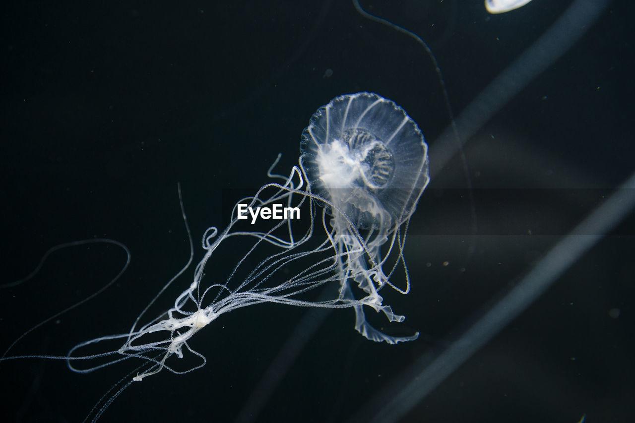 Jellyfish Swimming In Aquarium Berlin
