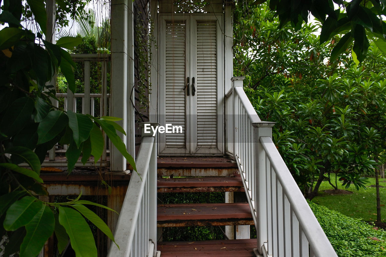 plant, architecture, built structure, growth, building exterior, day, tree, no people, nature, building, green color, house, leaf, front or back yard, plant part, outdoors, window, entrance, wood - material, seat