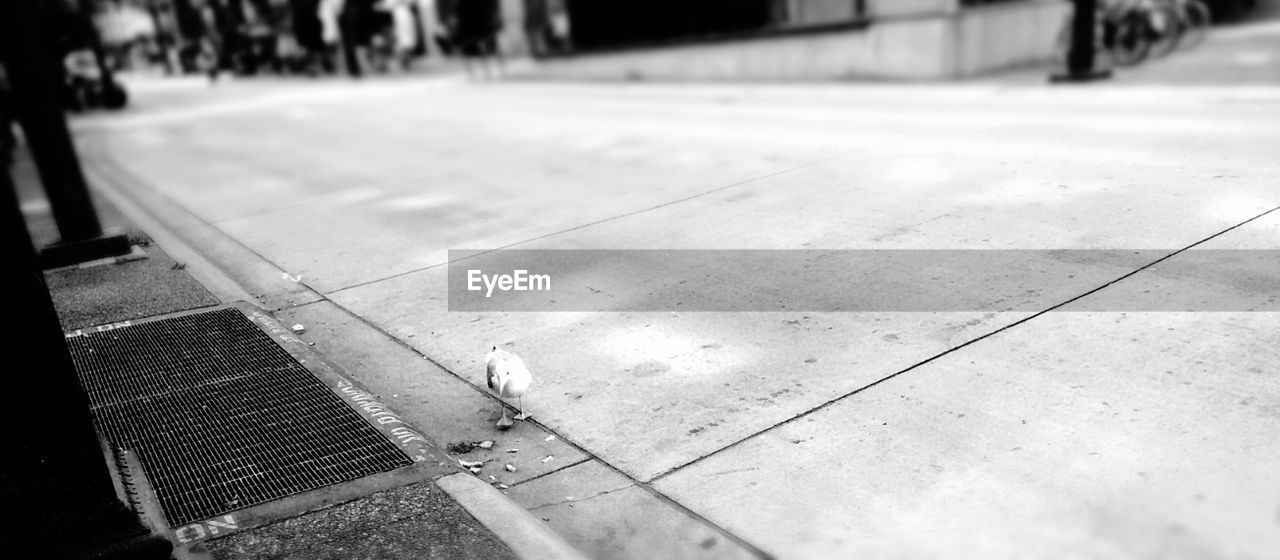 High angle view of seagull on sidewalk
