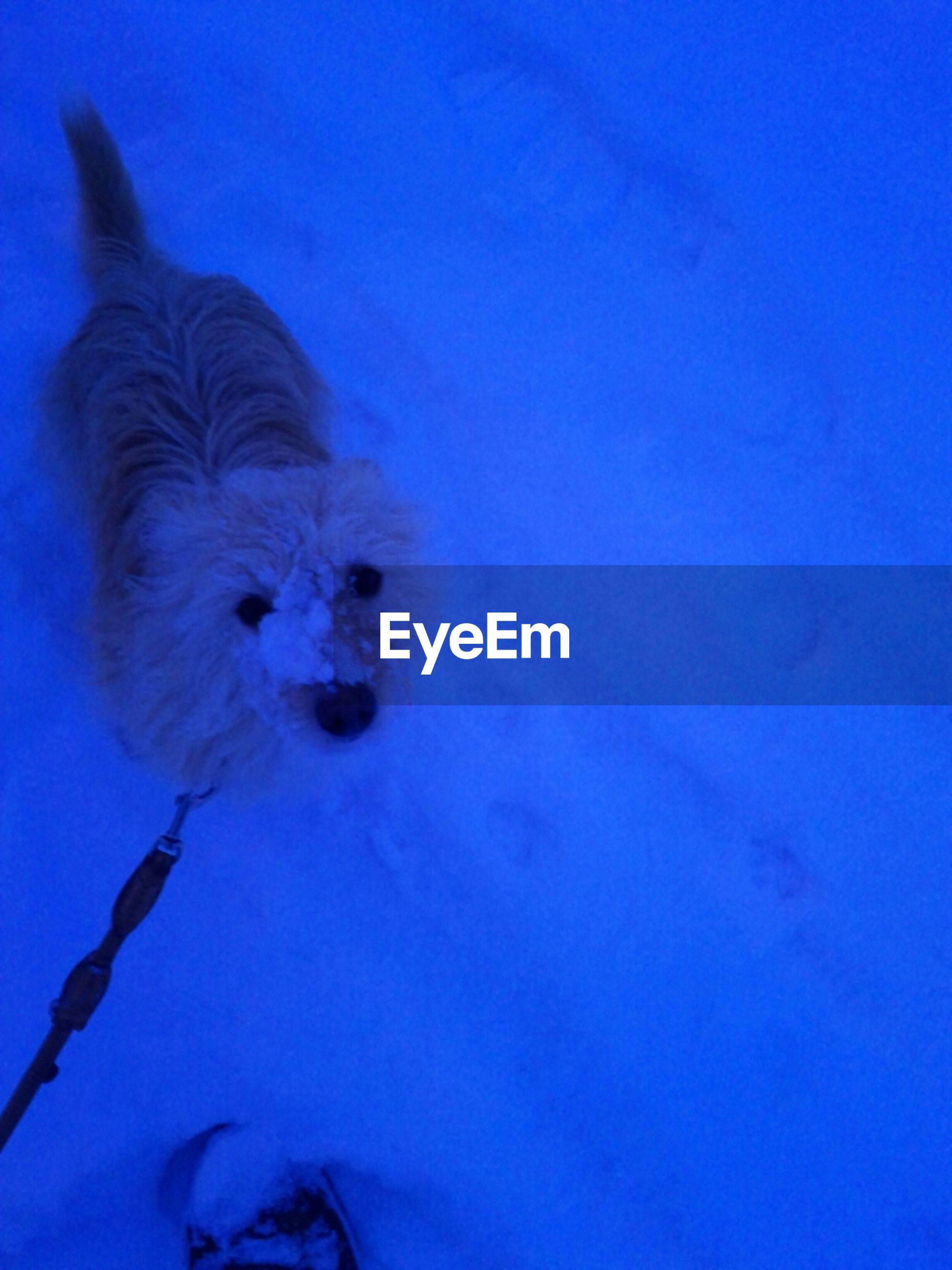 blue, animal themes, one animal, underwater, copy space, pets, domestic animals, mammal, wildlife, animals in the wild, close-up, sea life, swimming, nature, undersea, dog, no people, white color, full length, indoors