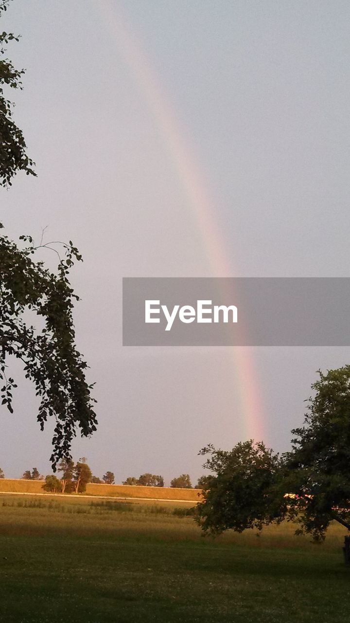 tree, rainbow, plant, beauty in nature, scenics - nature, landscape, sky, field, tranquil scene, tranquility, no people, nature, land, environment, day, growth, idyllic, double rainbow, multi colored, outdoors